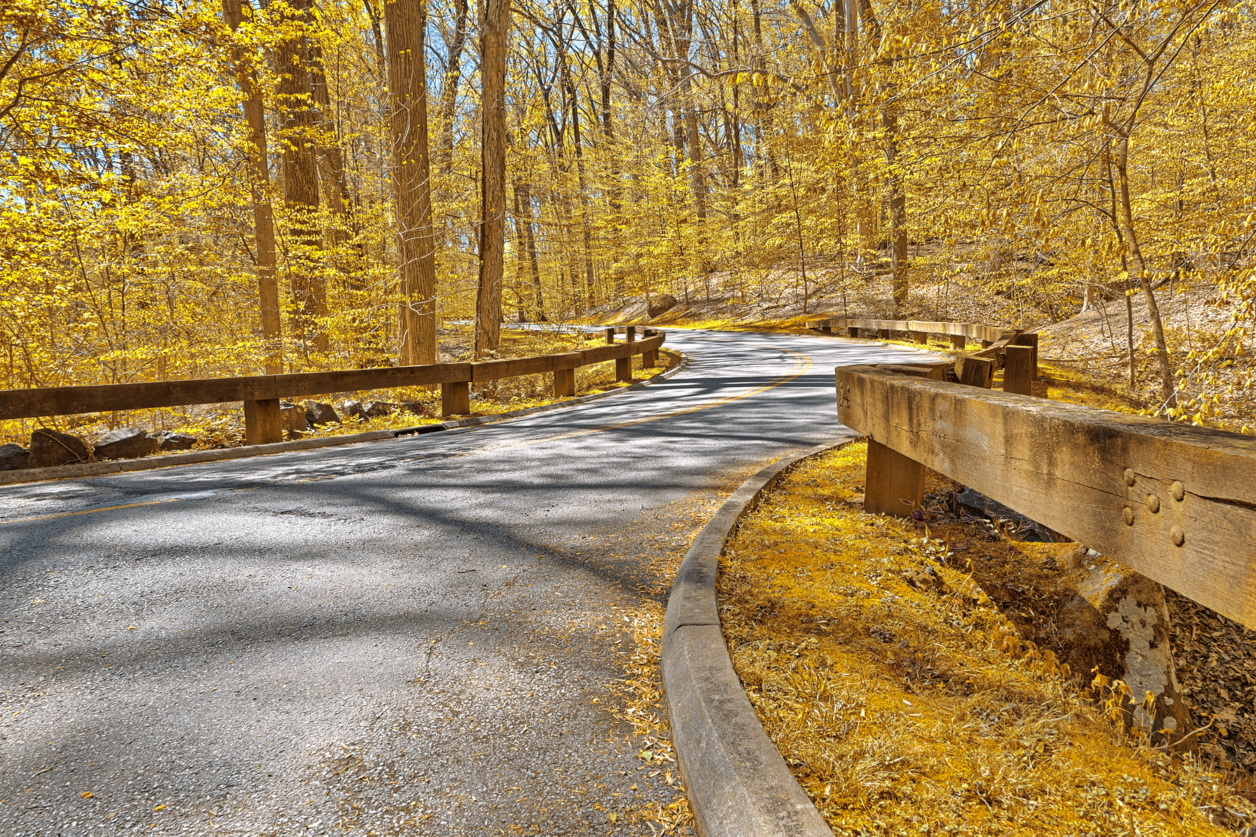 Gold forest road - hdr photo