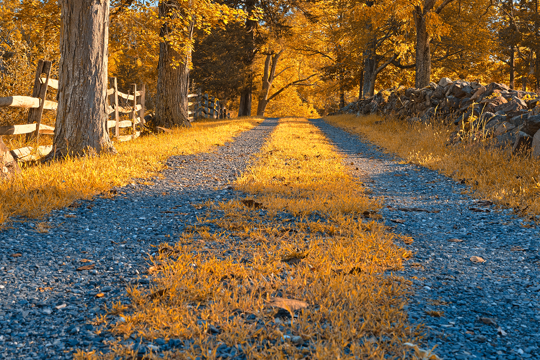 Gold gravel road - hdr photo