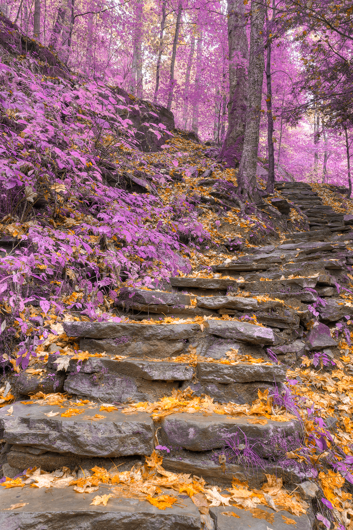 Gold lavender staircase - hdr photo