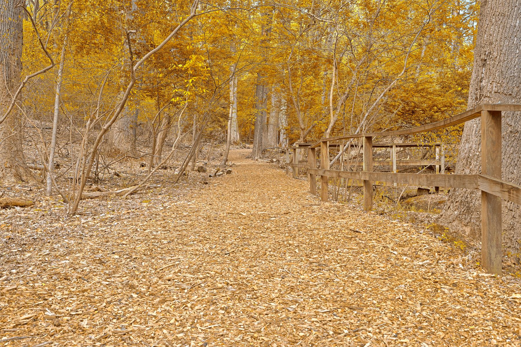 Gold sanctuary trail - hdr photo