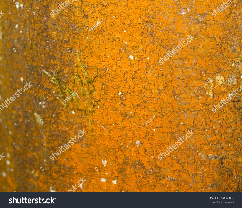 Horrible Orange Rotting Decay Wood Bark Stock Photo 728968882 ...