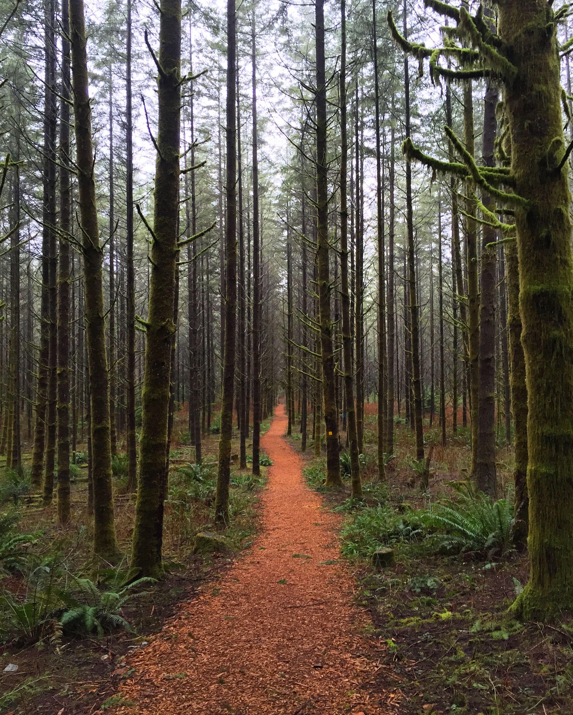 UBC Research Forest, British Columbia | Photos | Pinterest | British ...