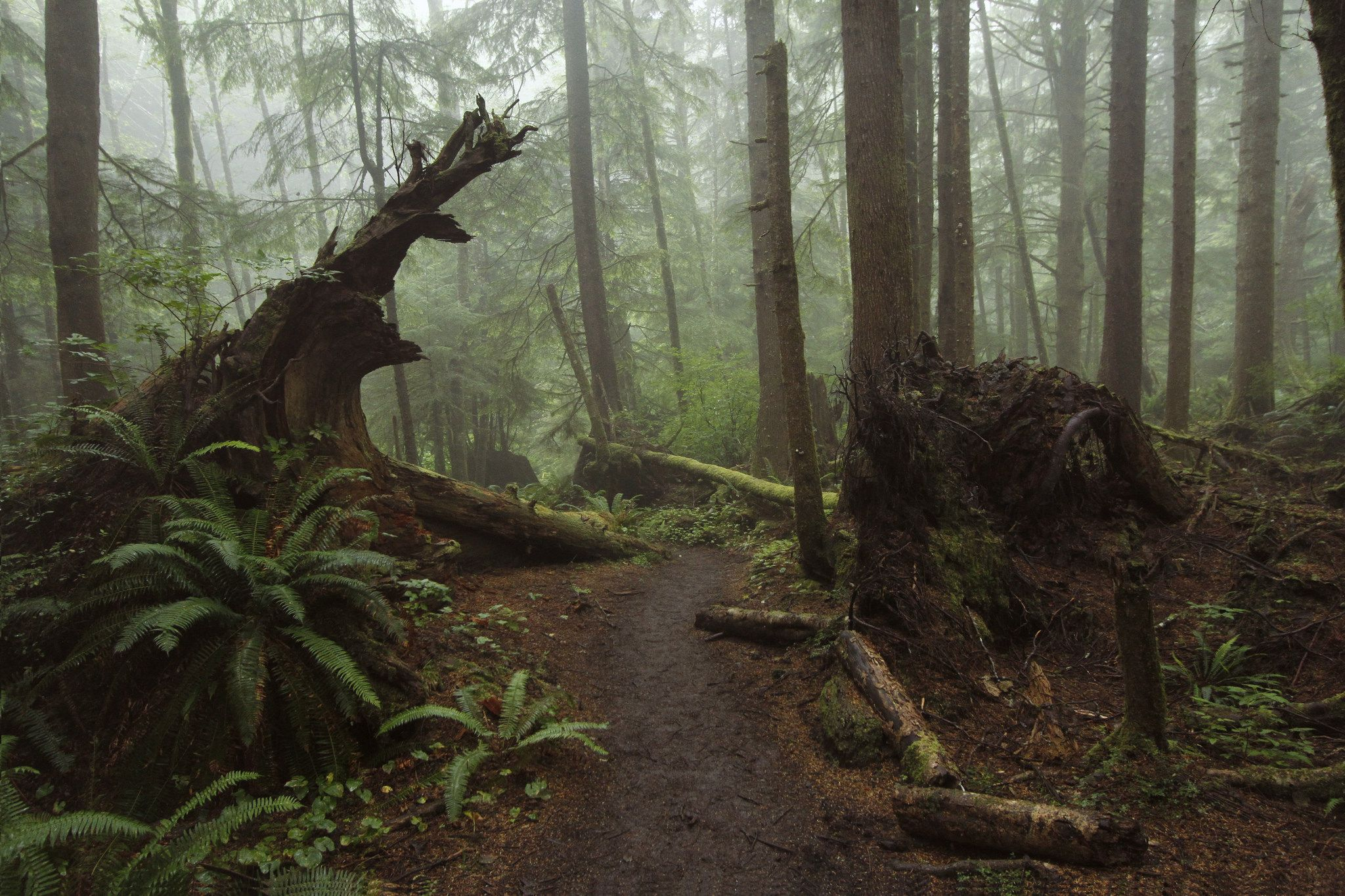Oregon forest | witchy | Pinterest