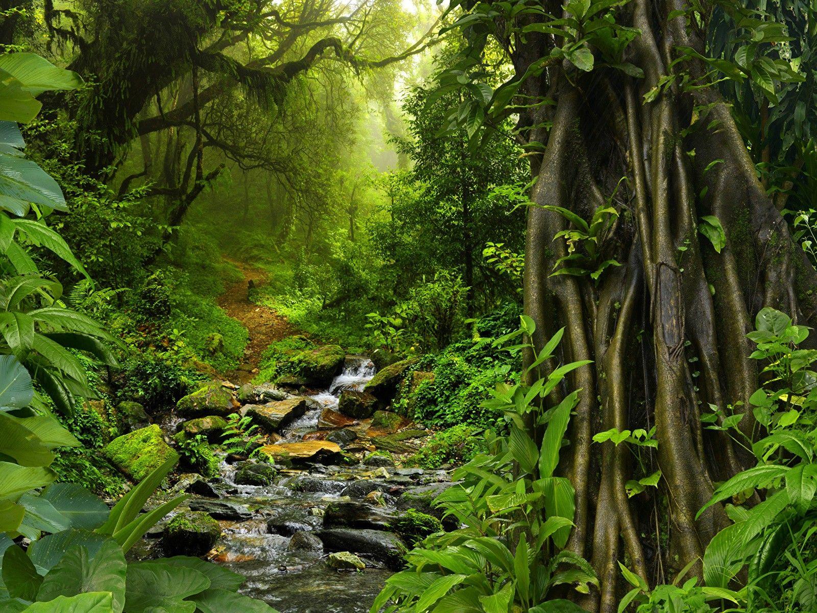 Thai forest | изгнание | Pinterest