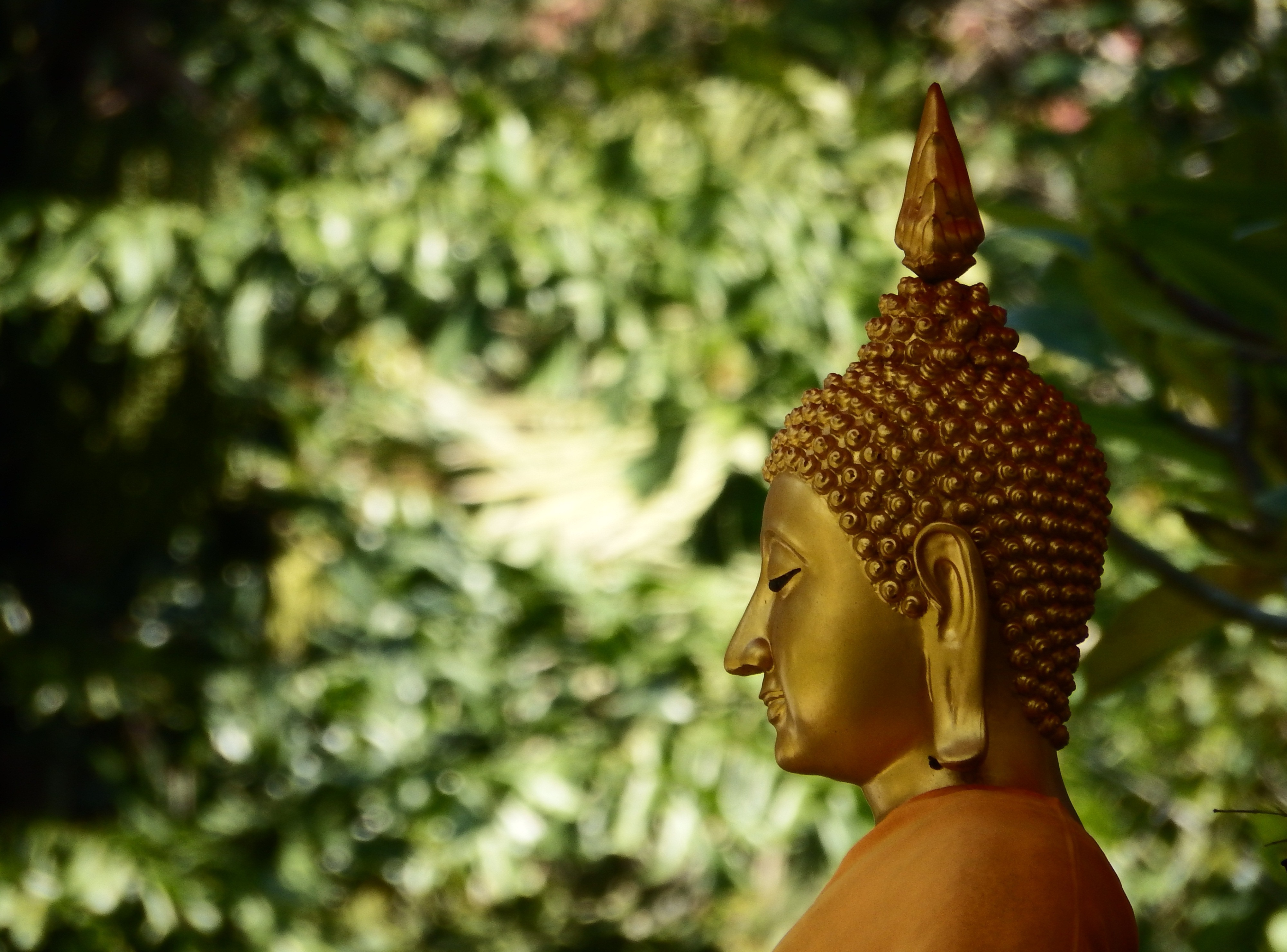 Golden Buddha Face, Asia, Buddha, Yoga, Wisdom, HQ Photo