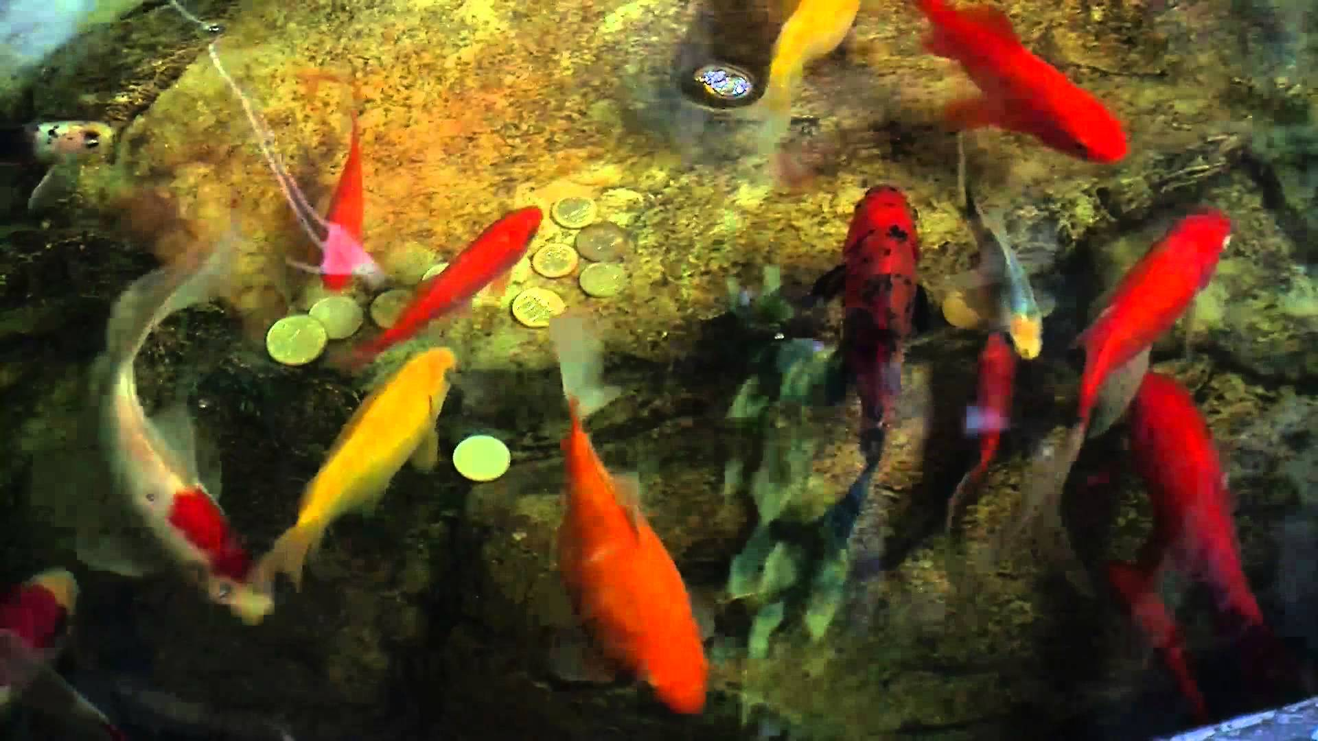 The Golden Fish - YouTube