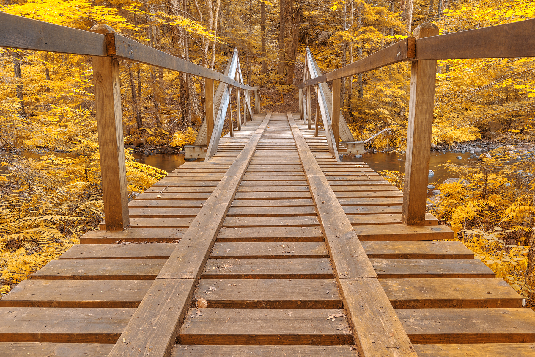 Golden forest track bridge - hdr photo