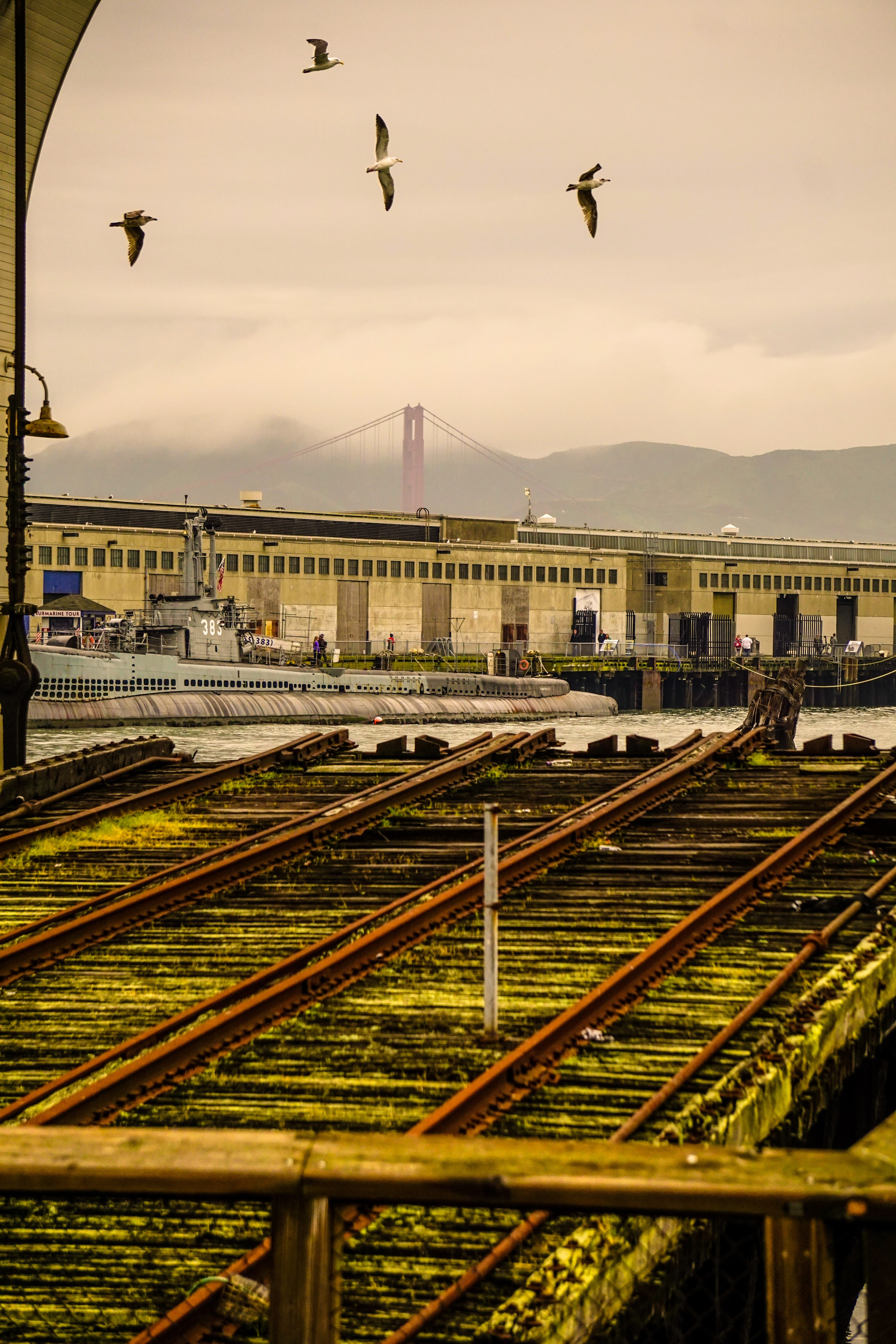 Golden Gate From Embarcadero, Birds, Boats, Gate, Golden, HQ Photo