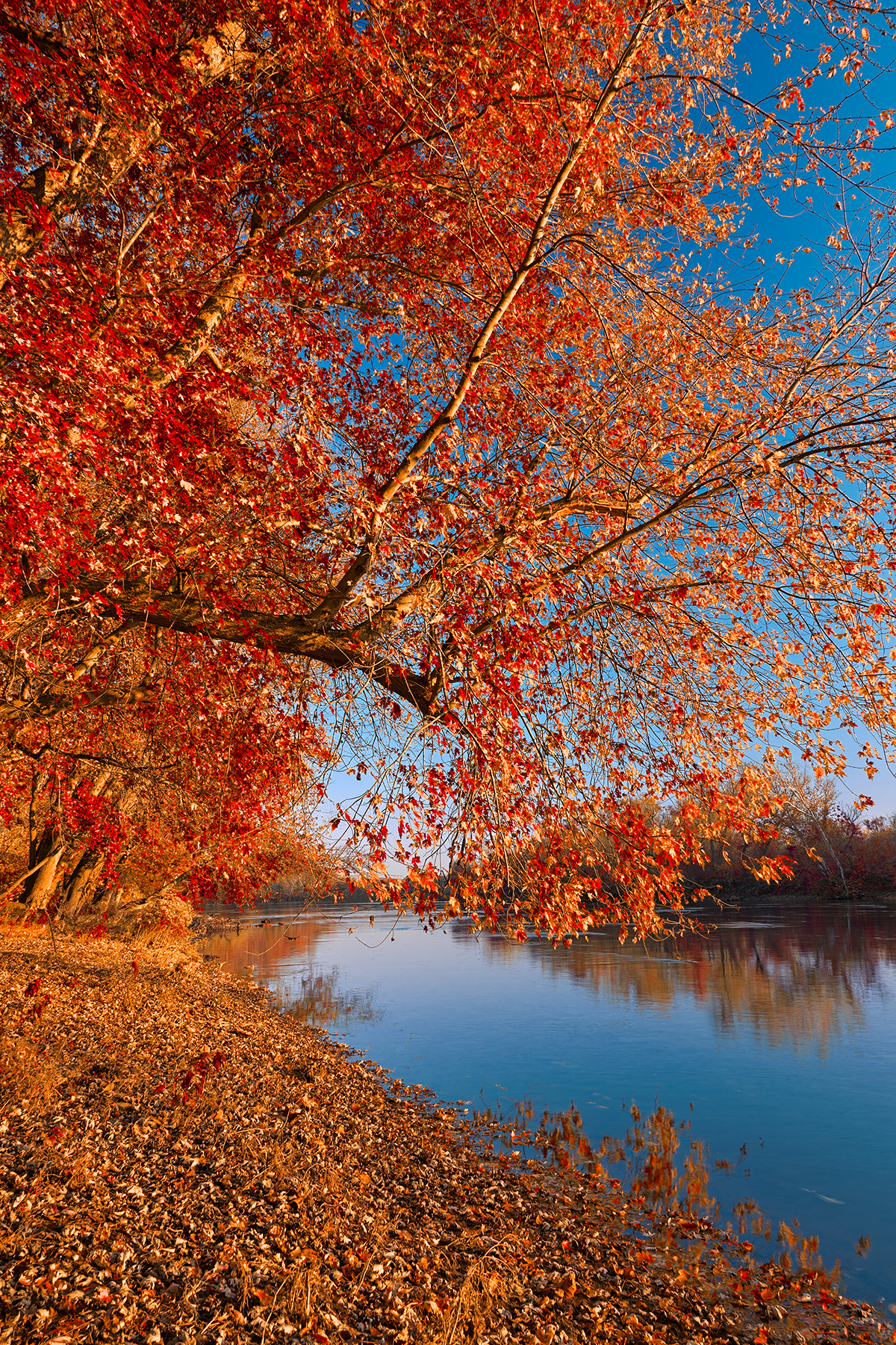 Golden potomac hour - ruby autumn hdr photo