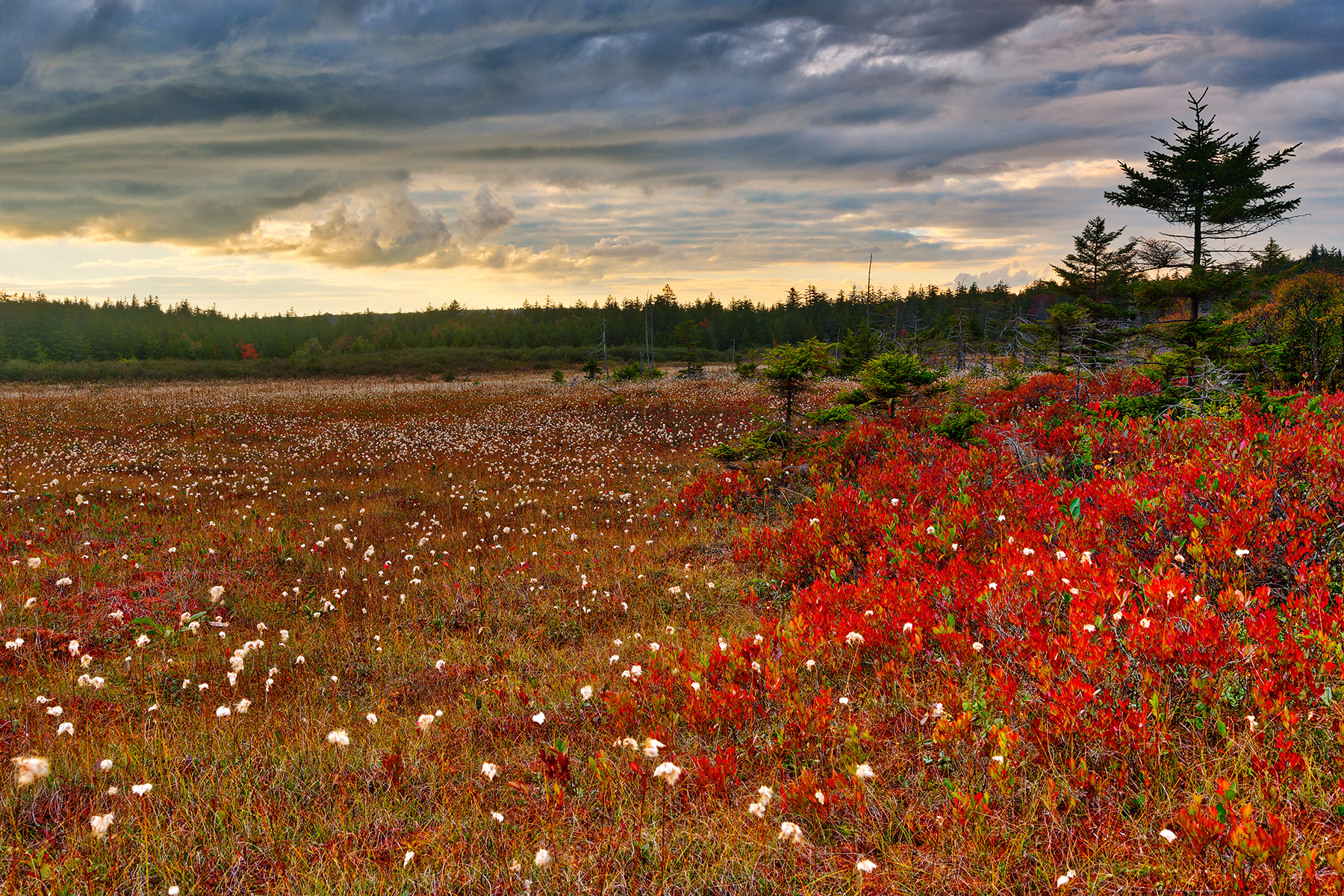 Golden Ruby Hour - Dolly Sods HDR, , Outside, Scenery, Scene, HQ Photo
