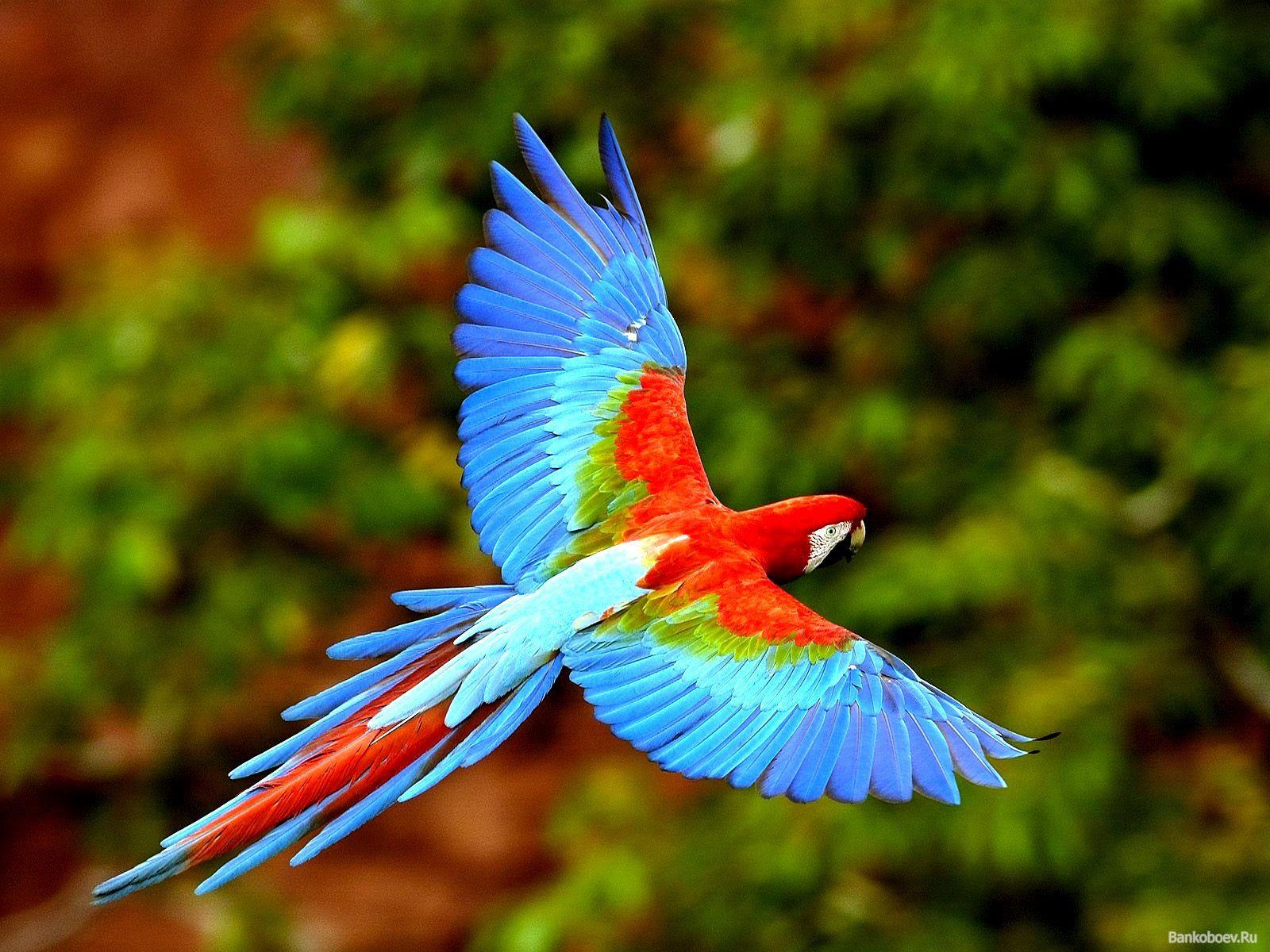 Gorgeous bird flying photo