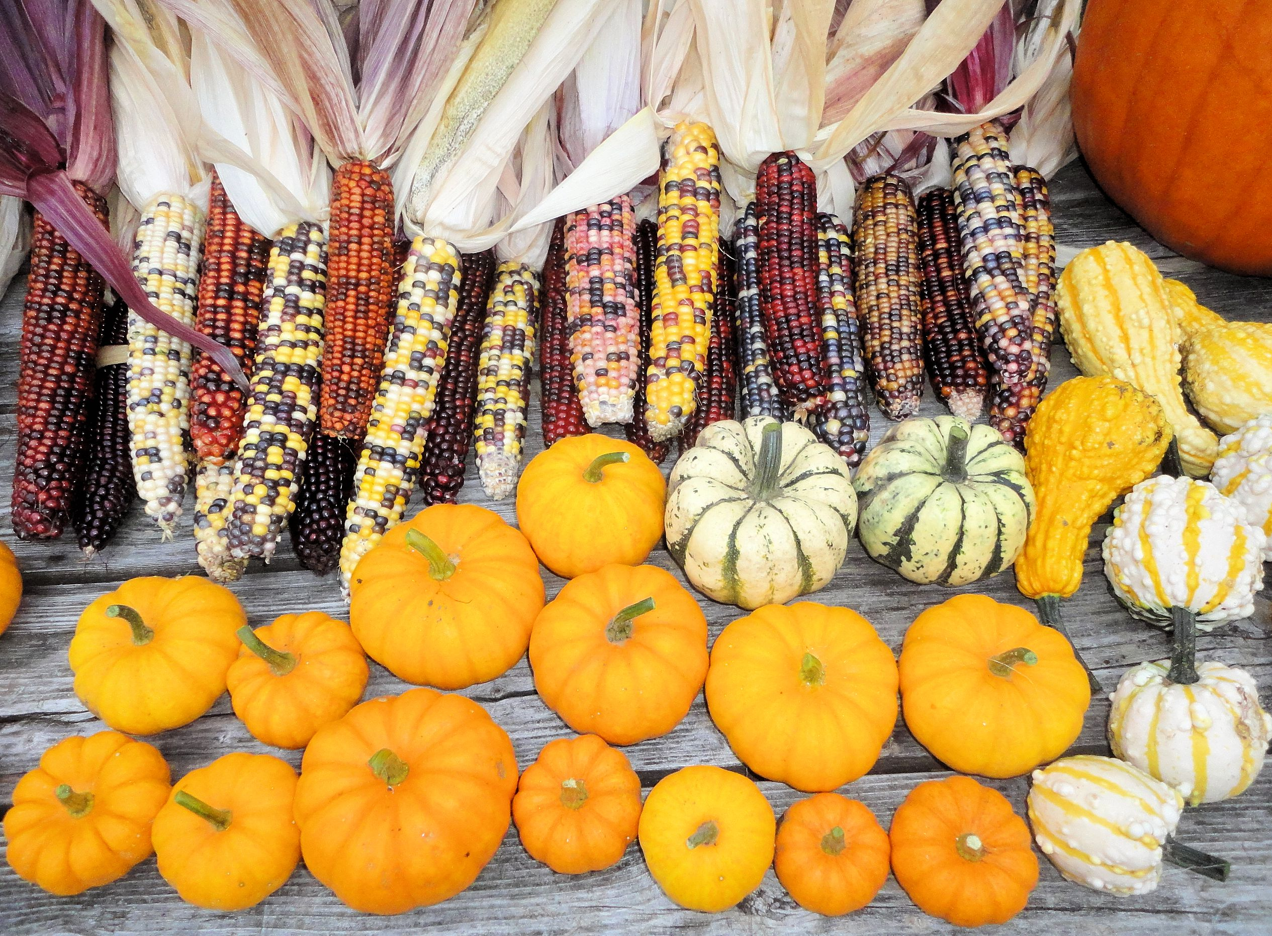 Gourds and corn photo