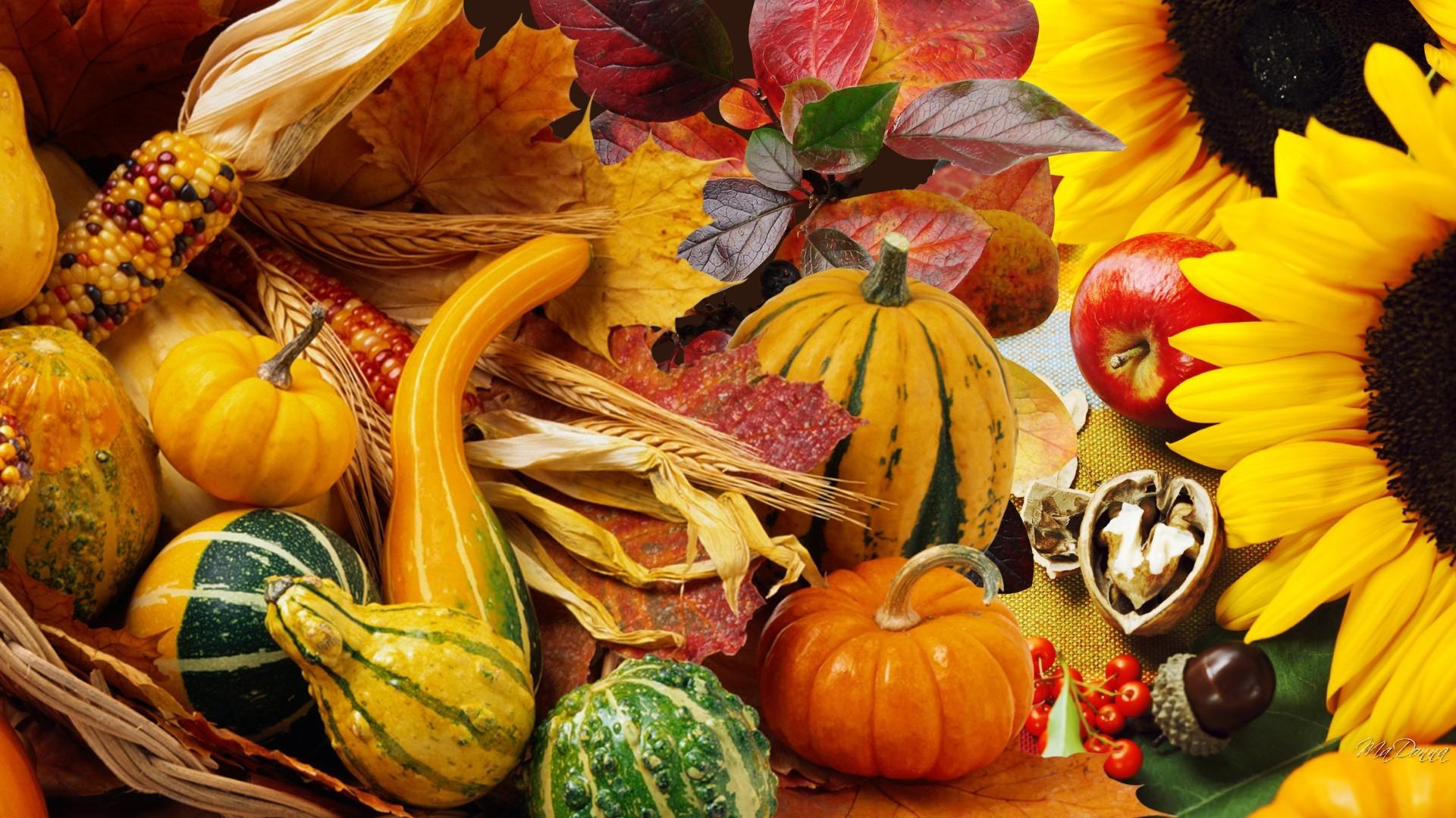 Misc: Squash Leaves Harvest Vegetables Fall Garden Thanksgiving ...