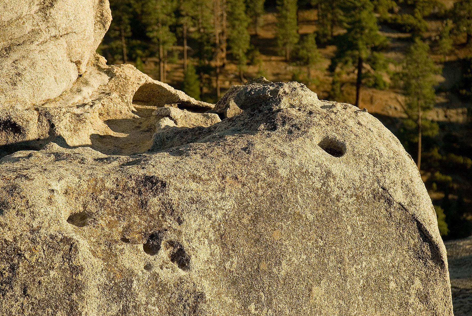 Granite of Ages, Boulder, Bspo06, Erosion, Forest, HQ Photo