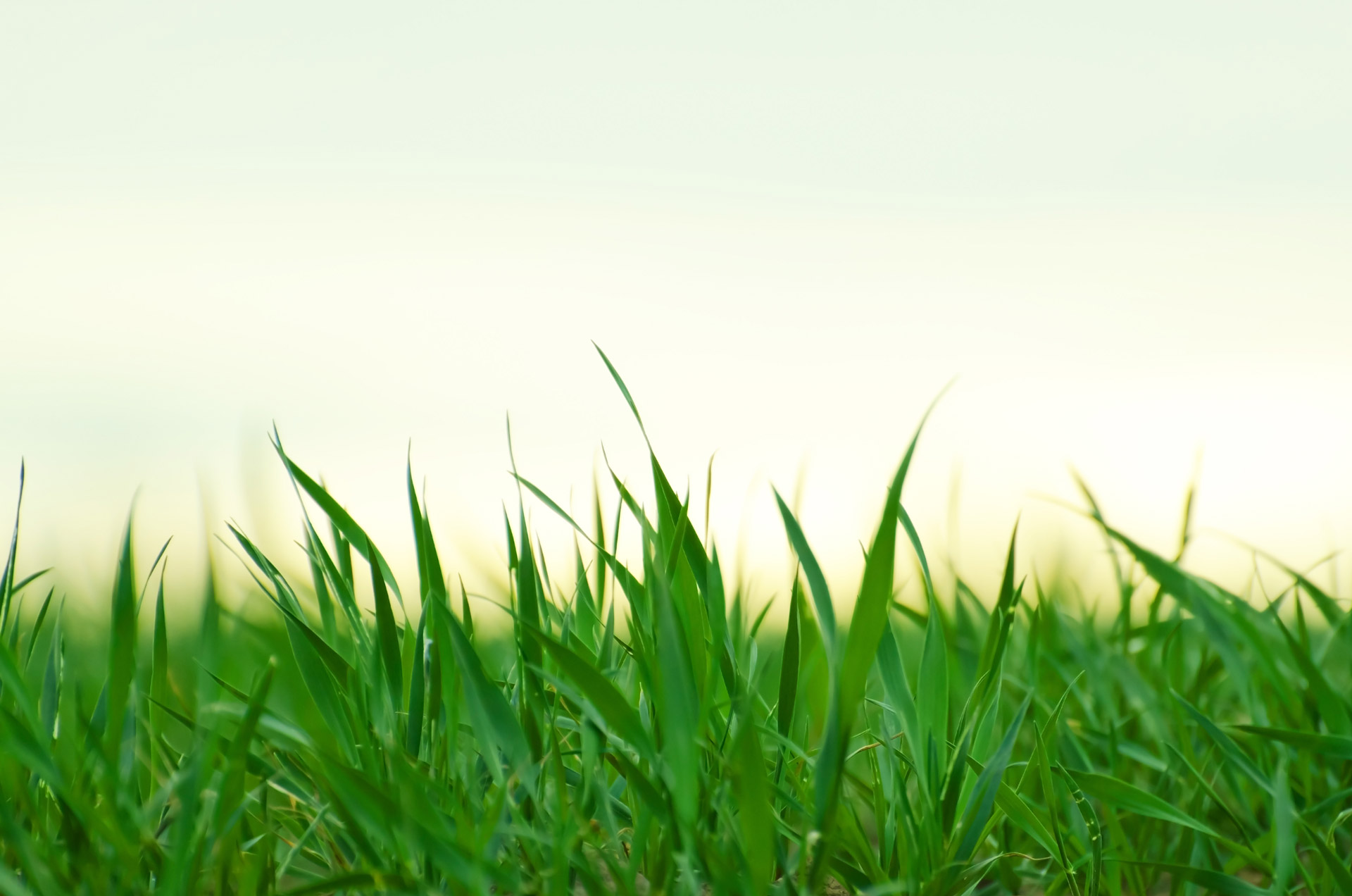 Grass Free Stock Photo - Public Domain Pictures