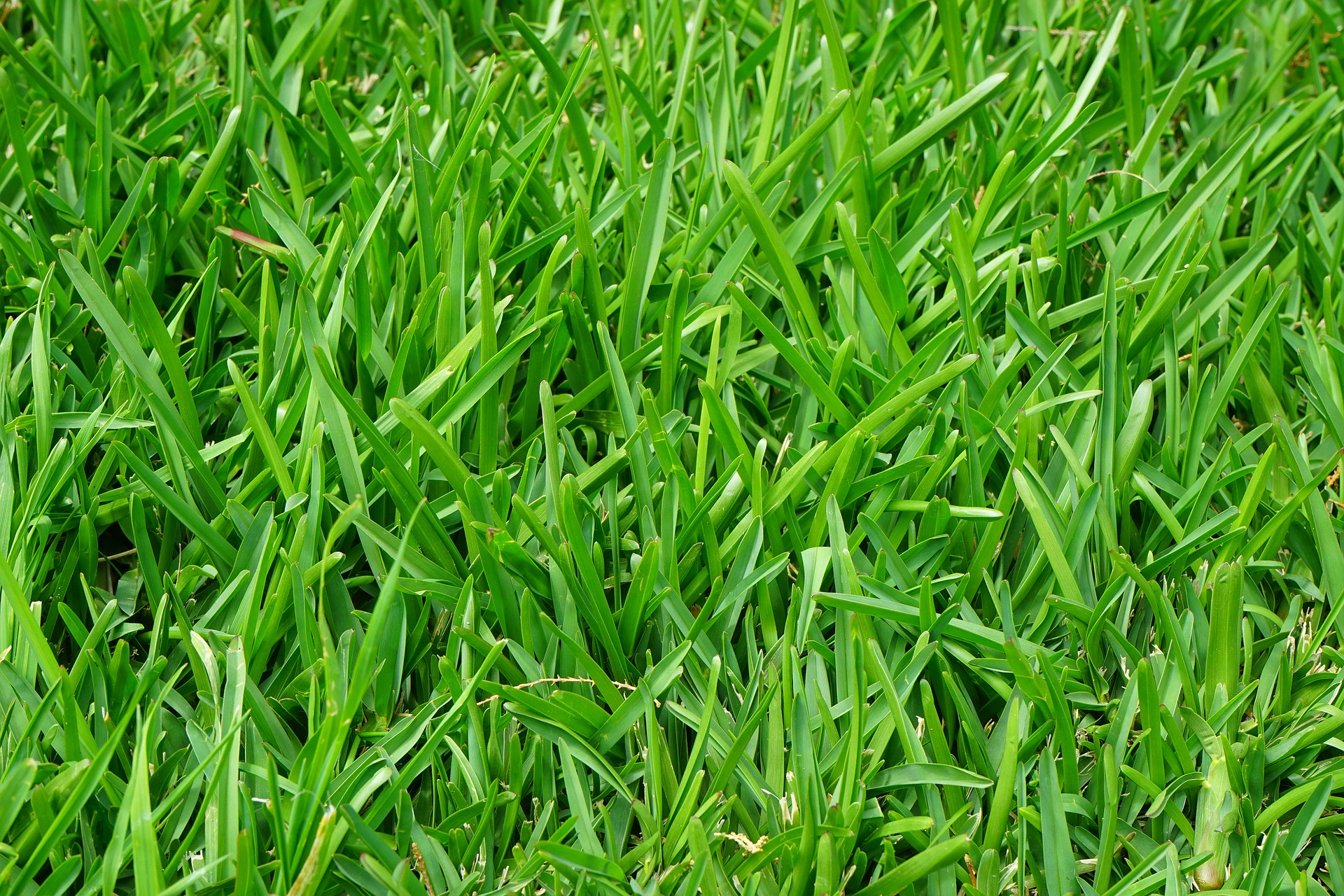 4 Grass Types For Lawns in Baltimore, MD - Lawnstarter