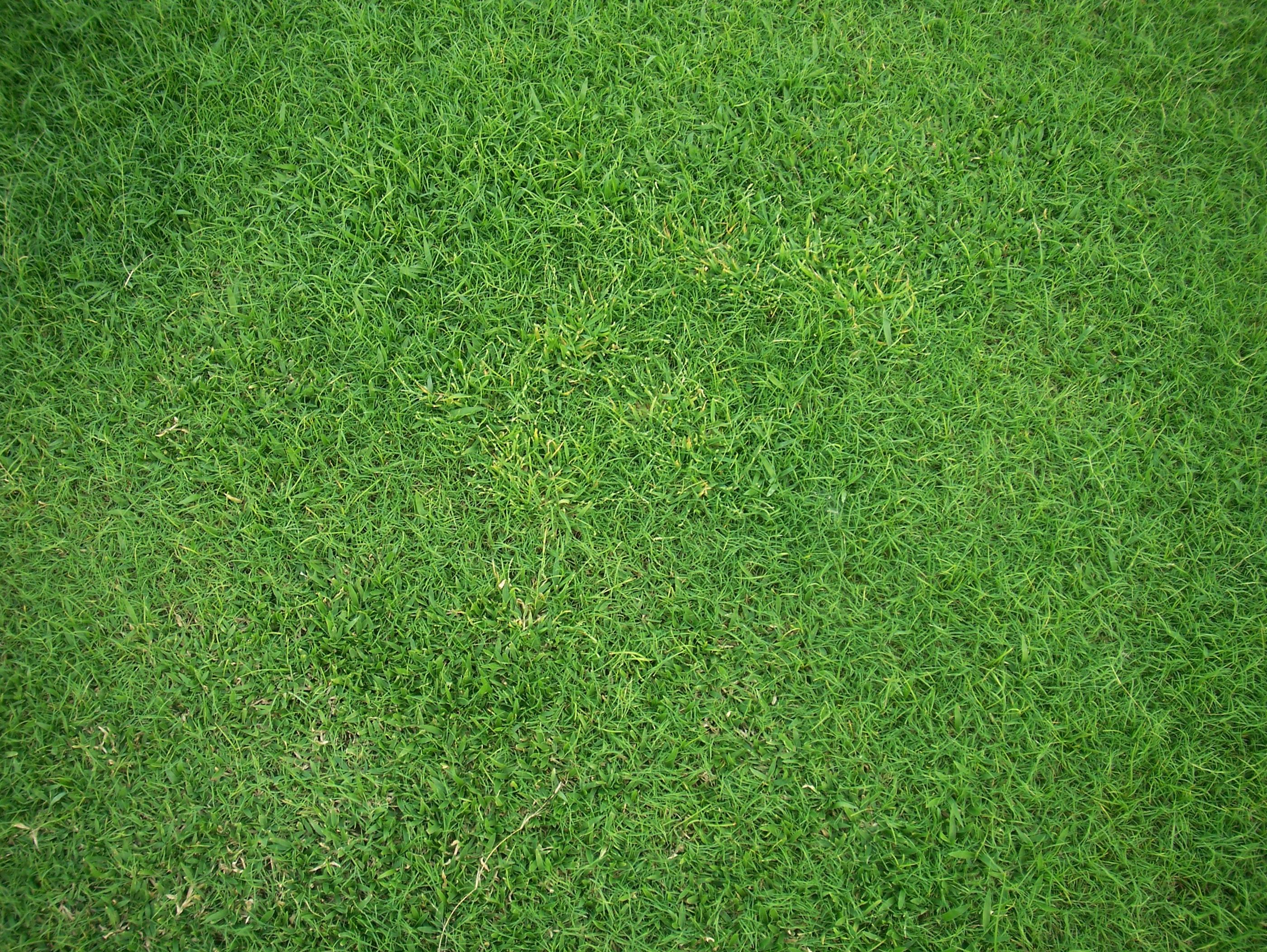 Grass004 :: Grass :: High Resolution Texture Library
