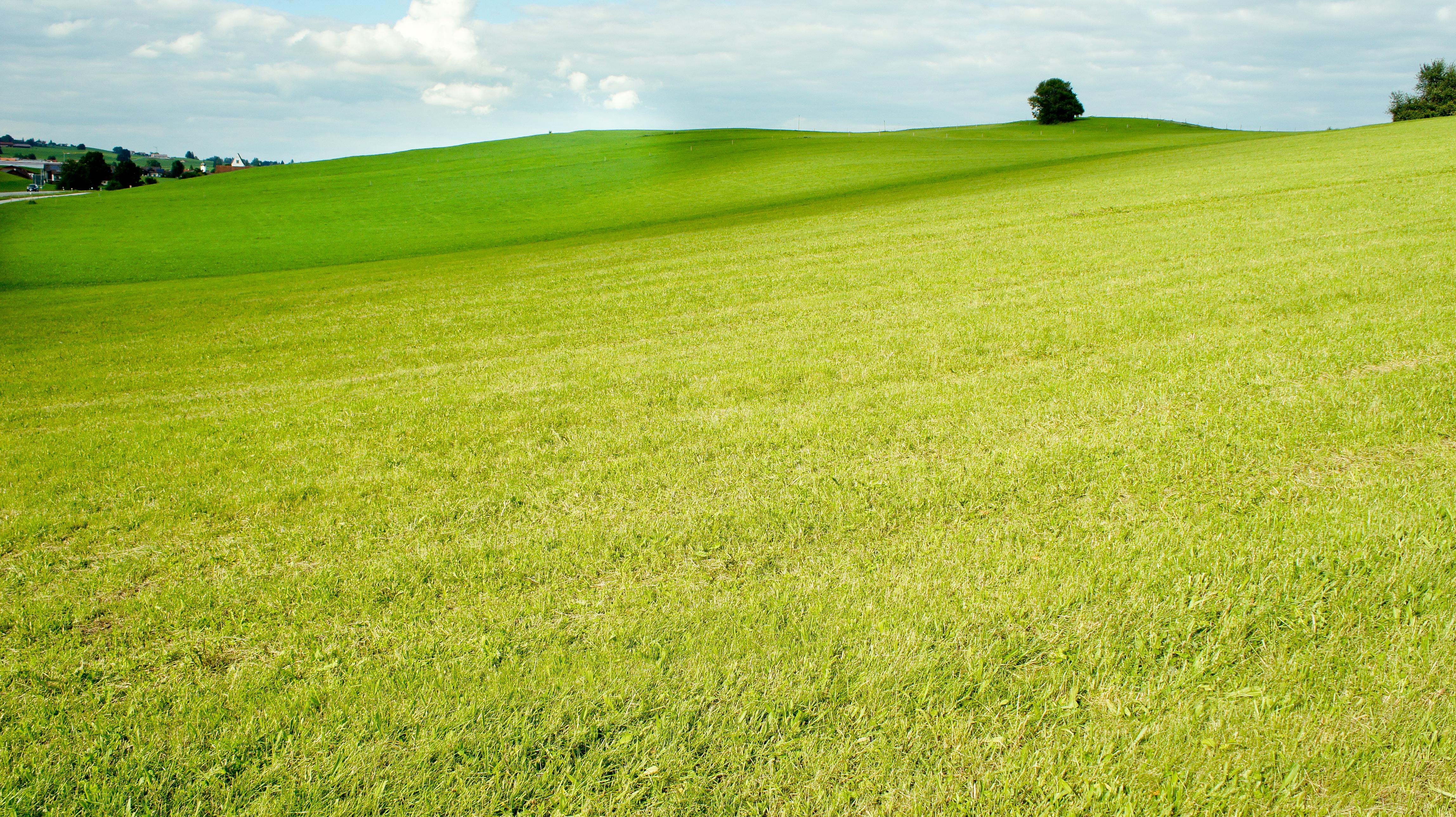 Clark Property Maintenance | distance-shot-of-grass.jpg