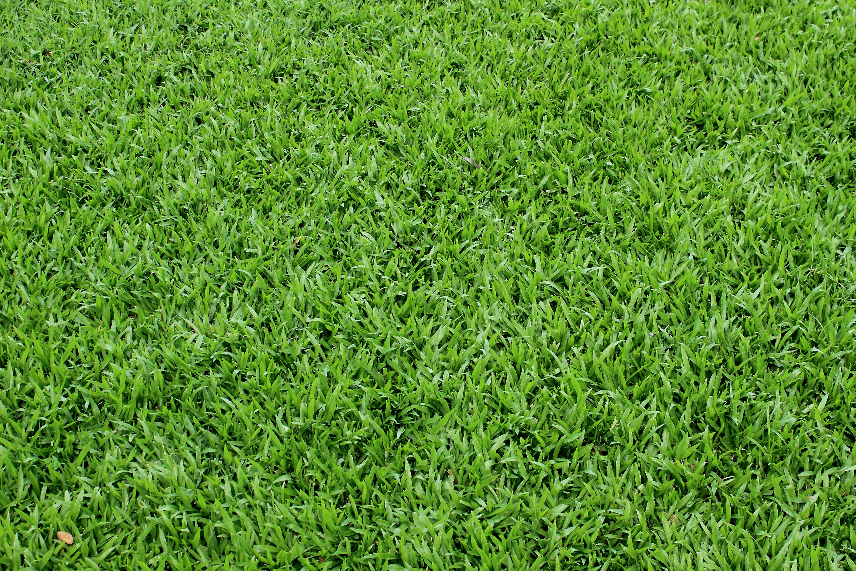 Grass, grass, texture, texture and backgrounds grass, green grass