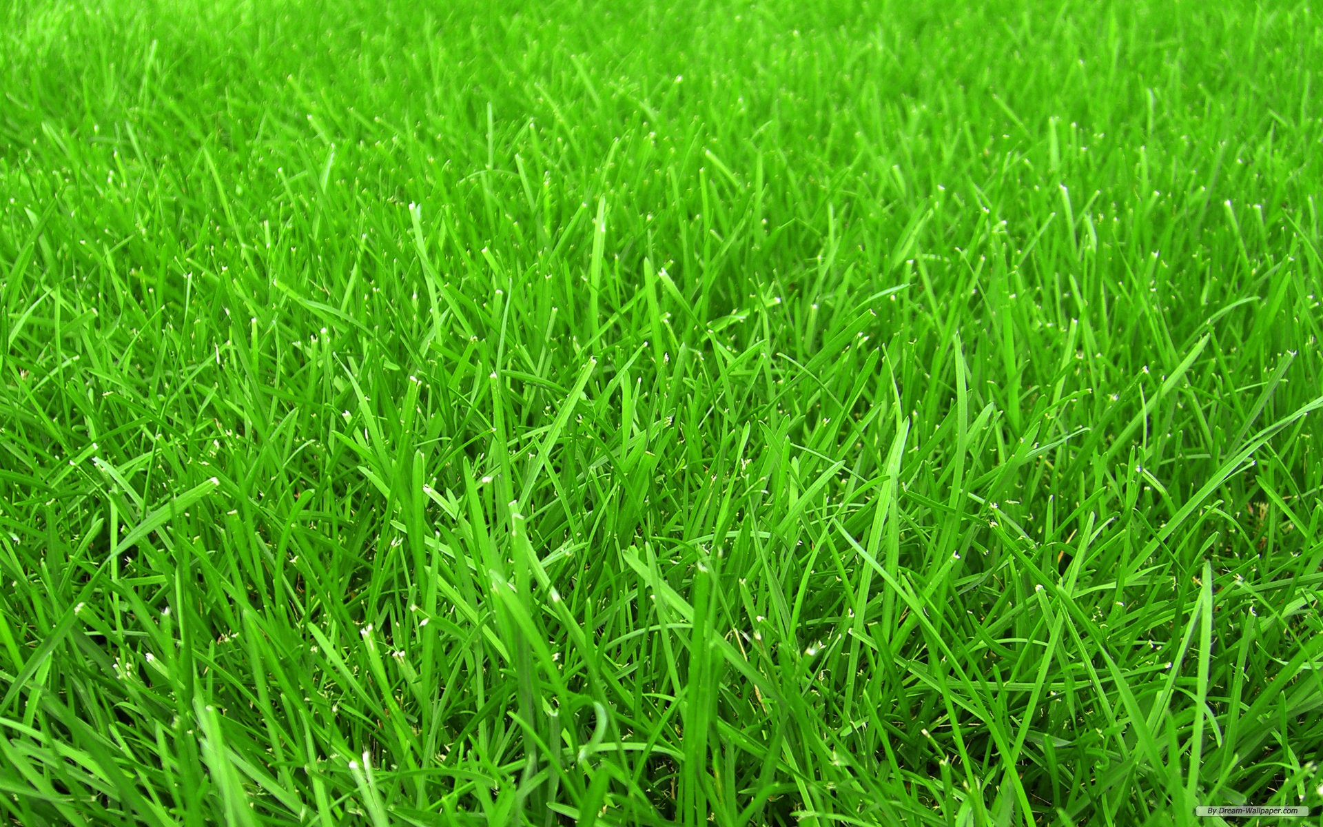 free photo  grass - abstract  natural  green - free download