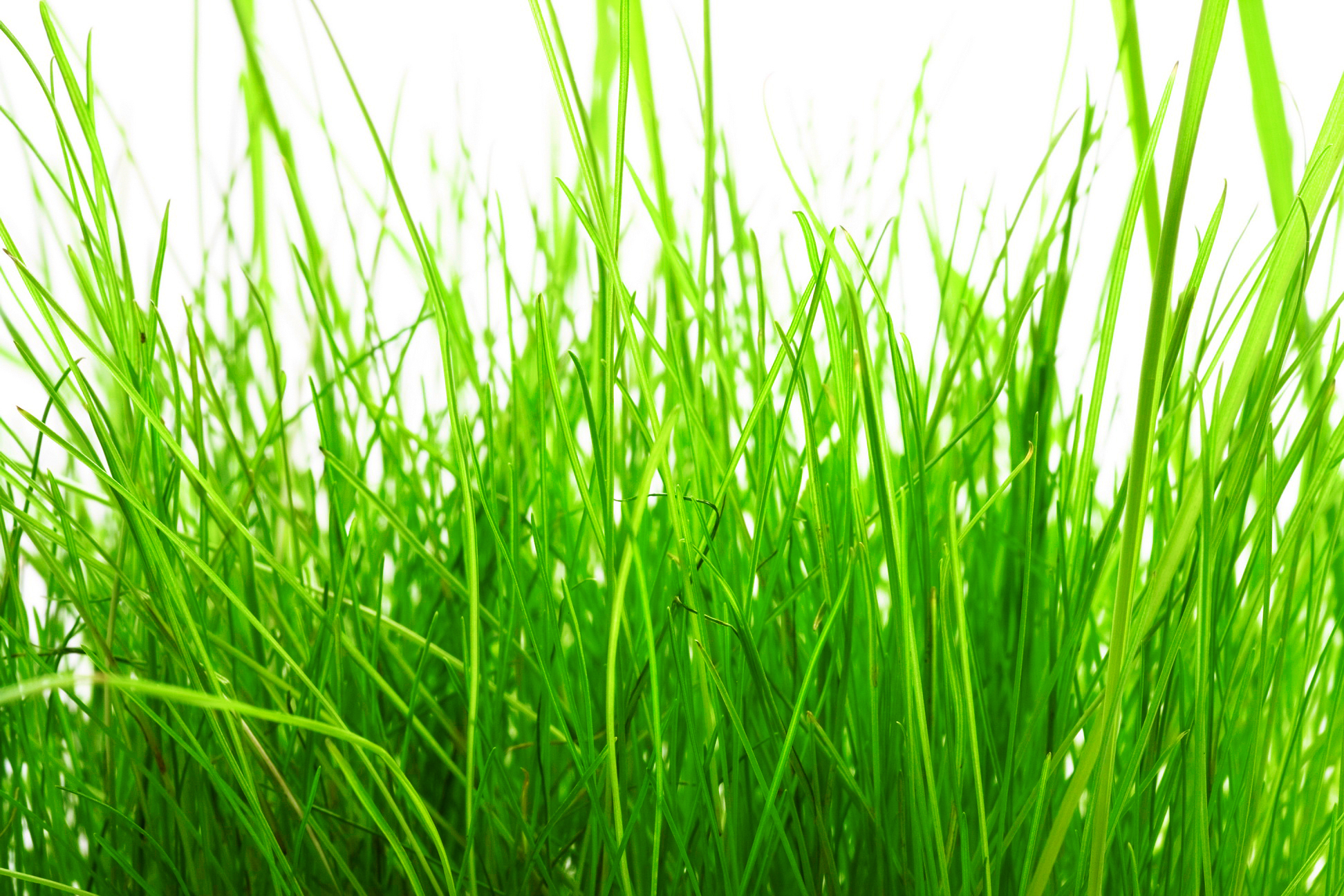 Grass, Pasture, Plain, Outdoor, Nobody, HQ Photo