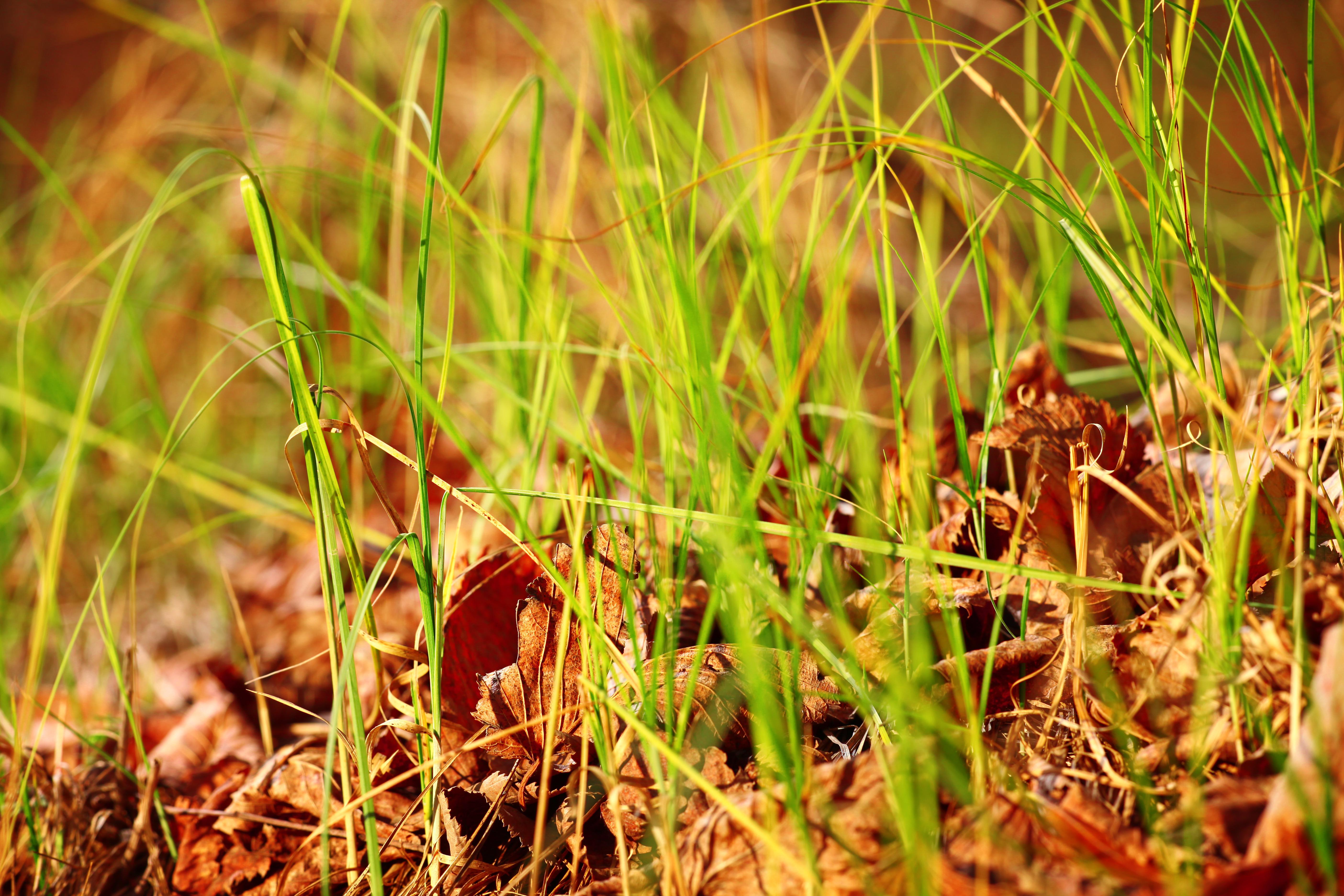 Grass, Green, Nature, Plants, HQ Photo