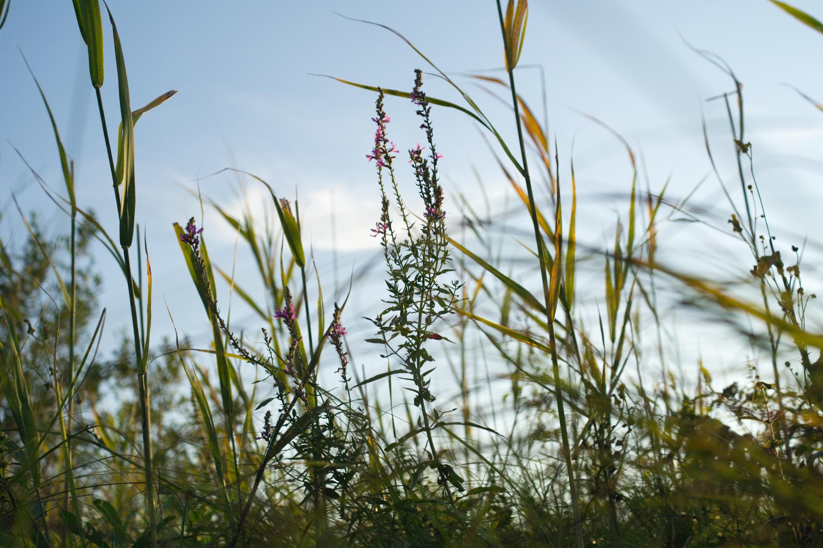 Grass, Wallpaper, Green, Summer, Sky, HQ Photo
