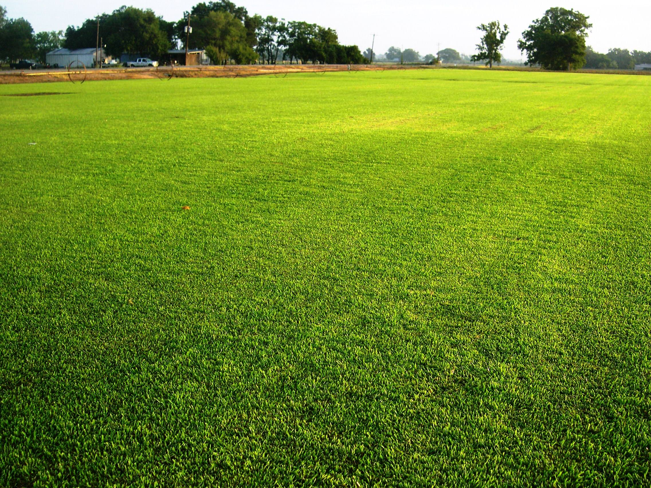 5 Care Tips for a Greener Lawn   Total Mortgage Blog