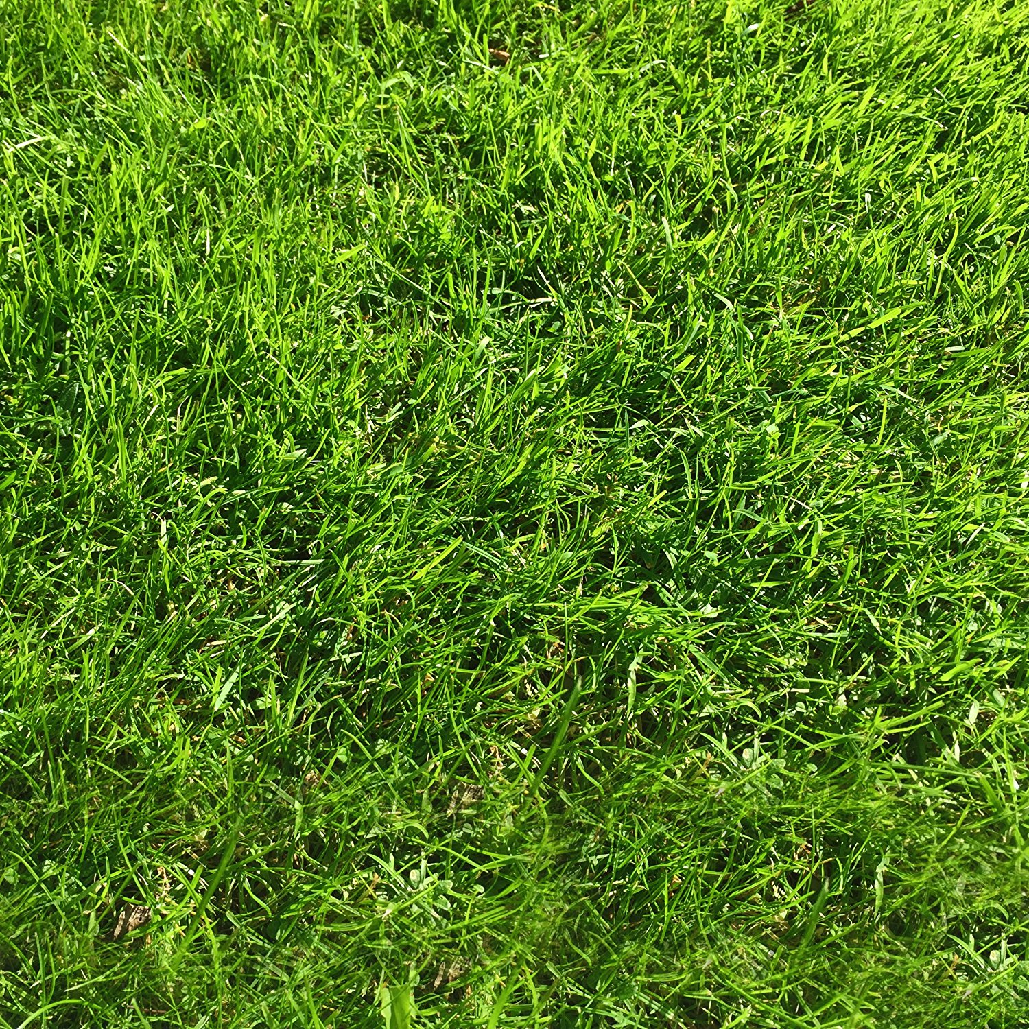 1 kg Grass Seed Covers 35 sqm (380 sq ft) - Premium Quality Seed ...