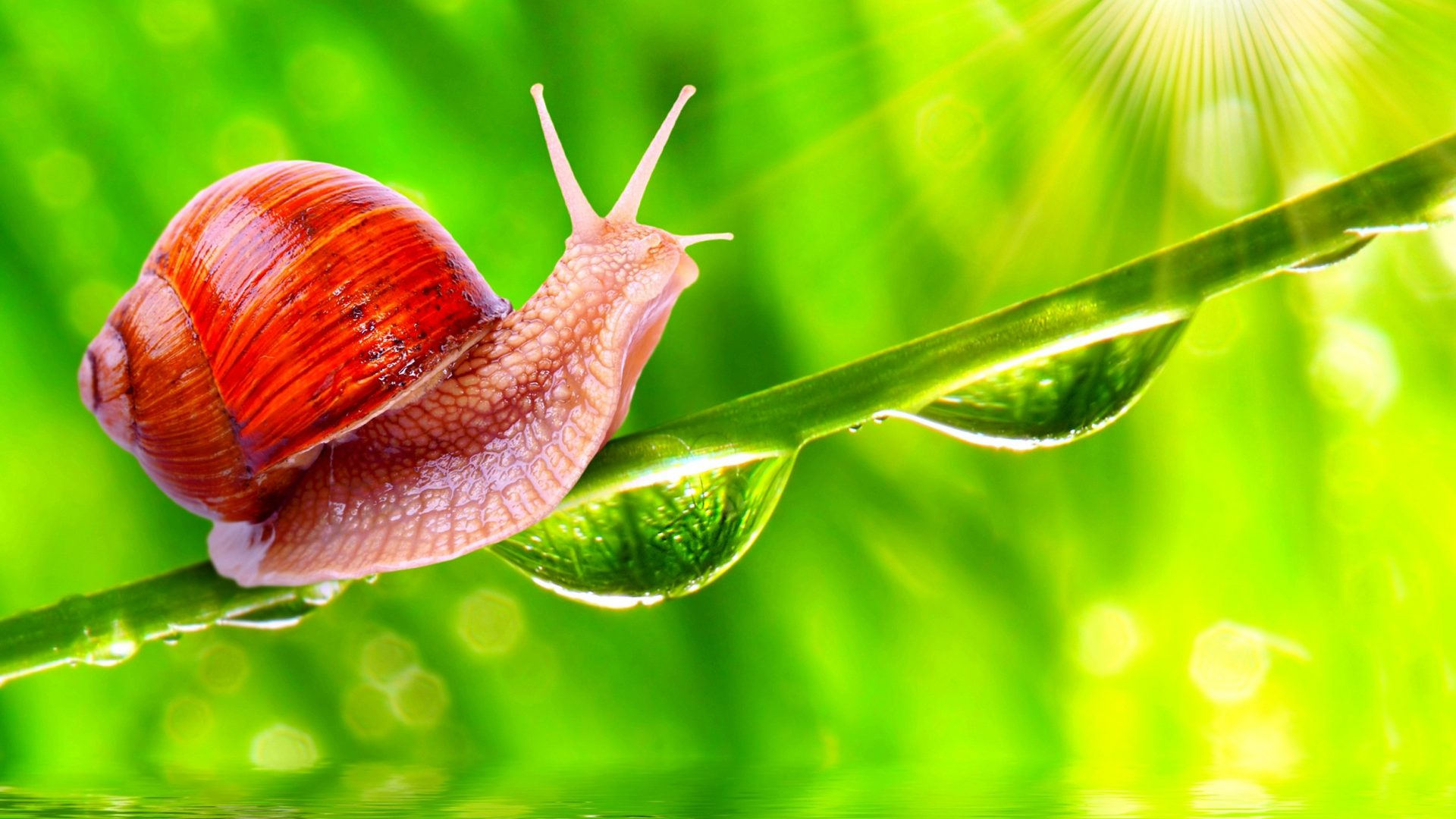 Misc: Green Snail Water Time Grass Reflection Drops Nature Sunshine ...