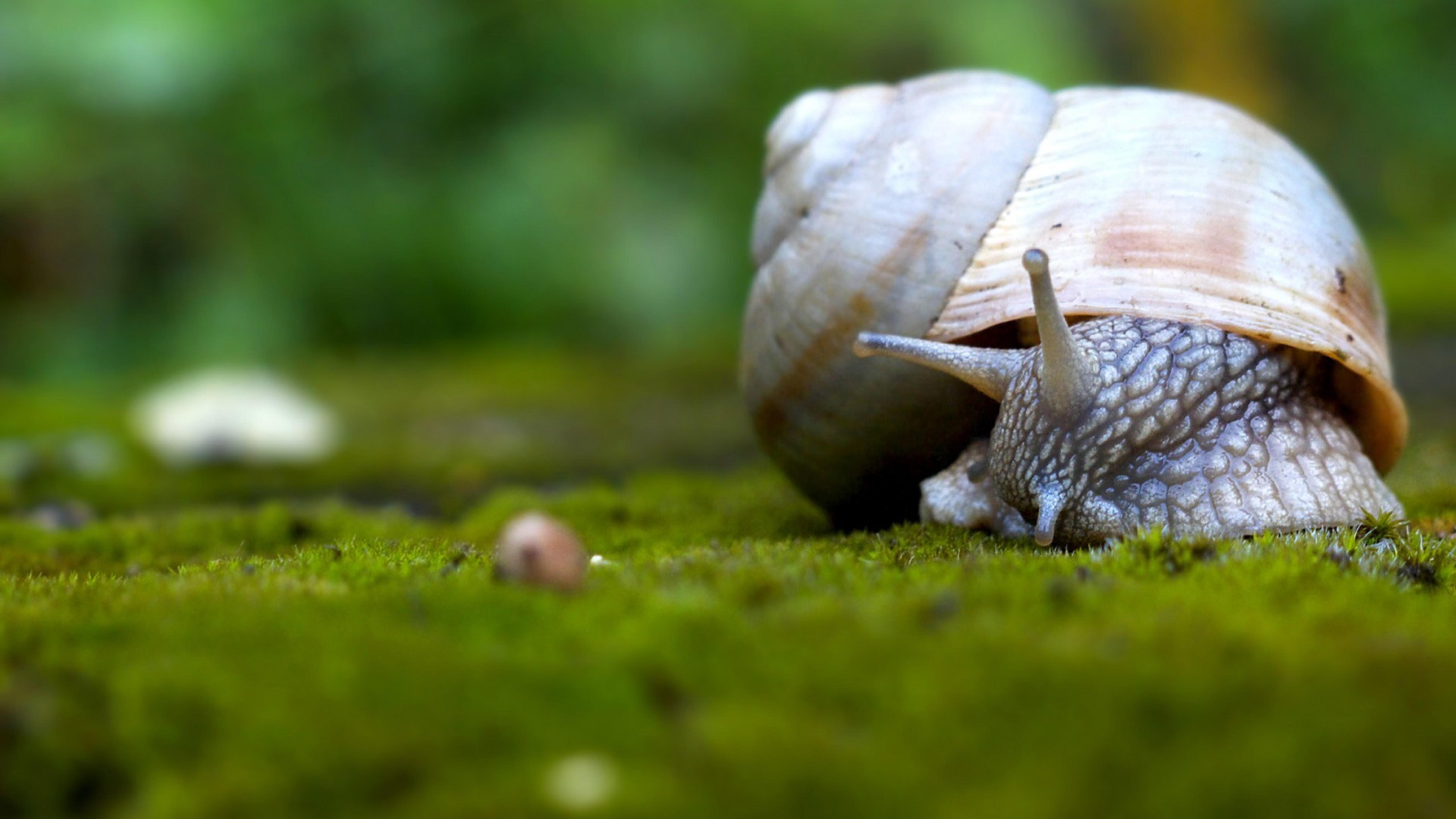 Snail walking on grass Wallpaper Download 5120x2880
