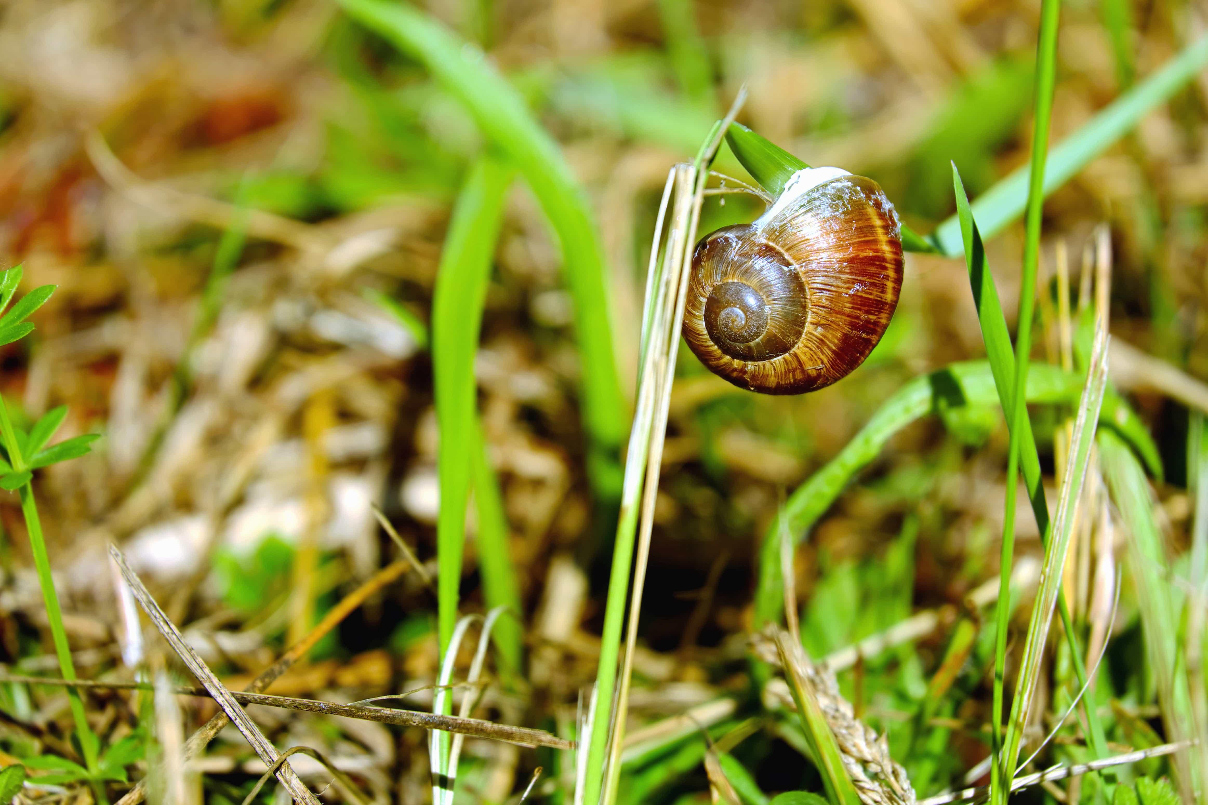Free picture: grass, leaf, nature, flora, garden, snail, mollusk