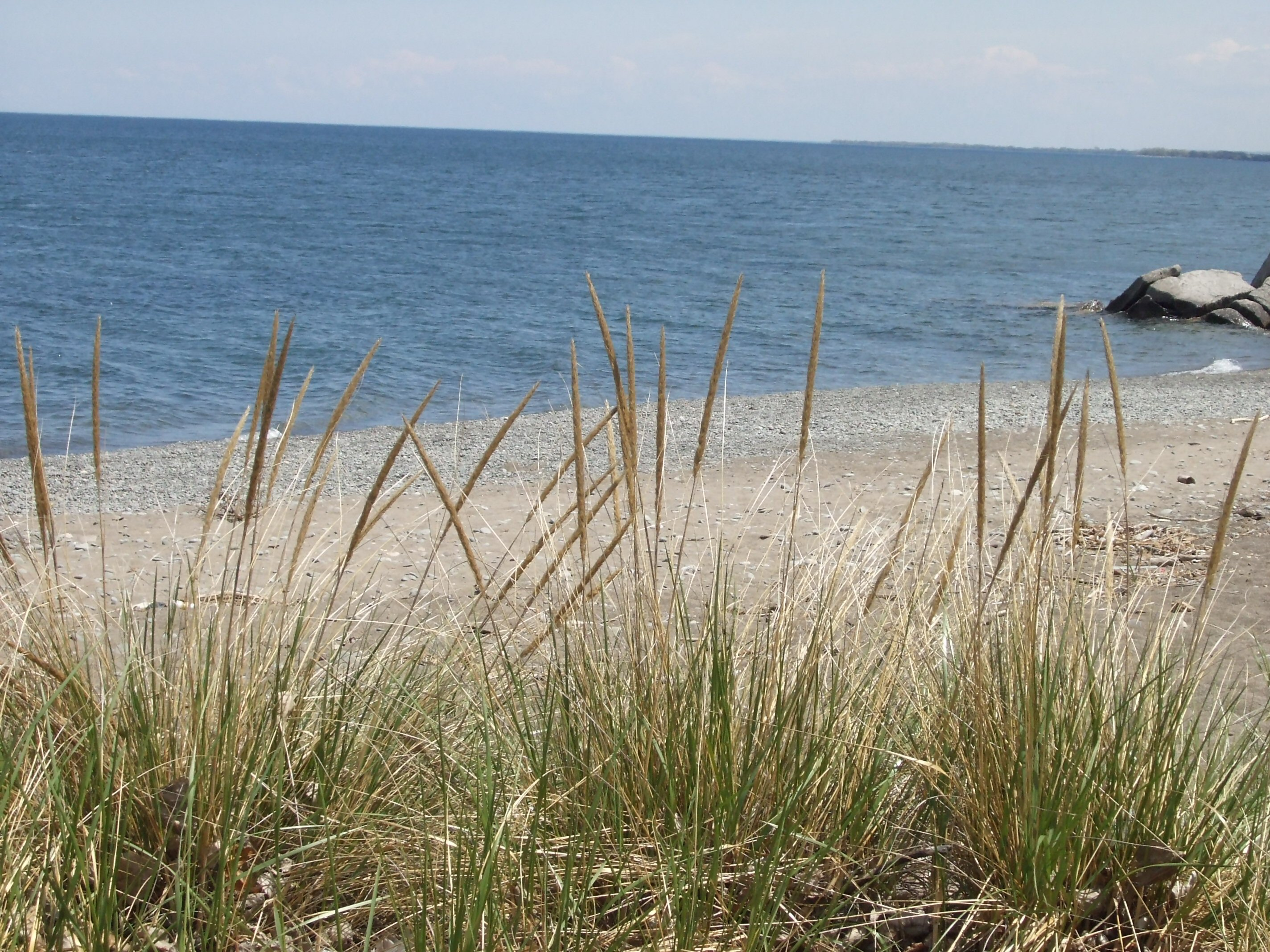 Grass at the beach photo