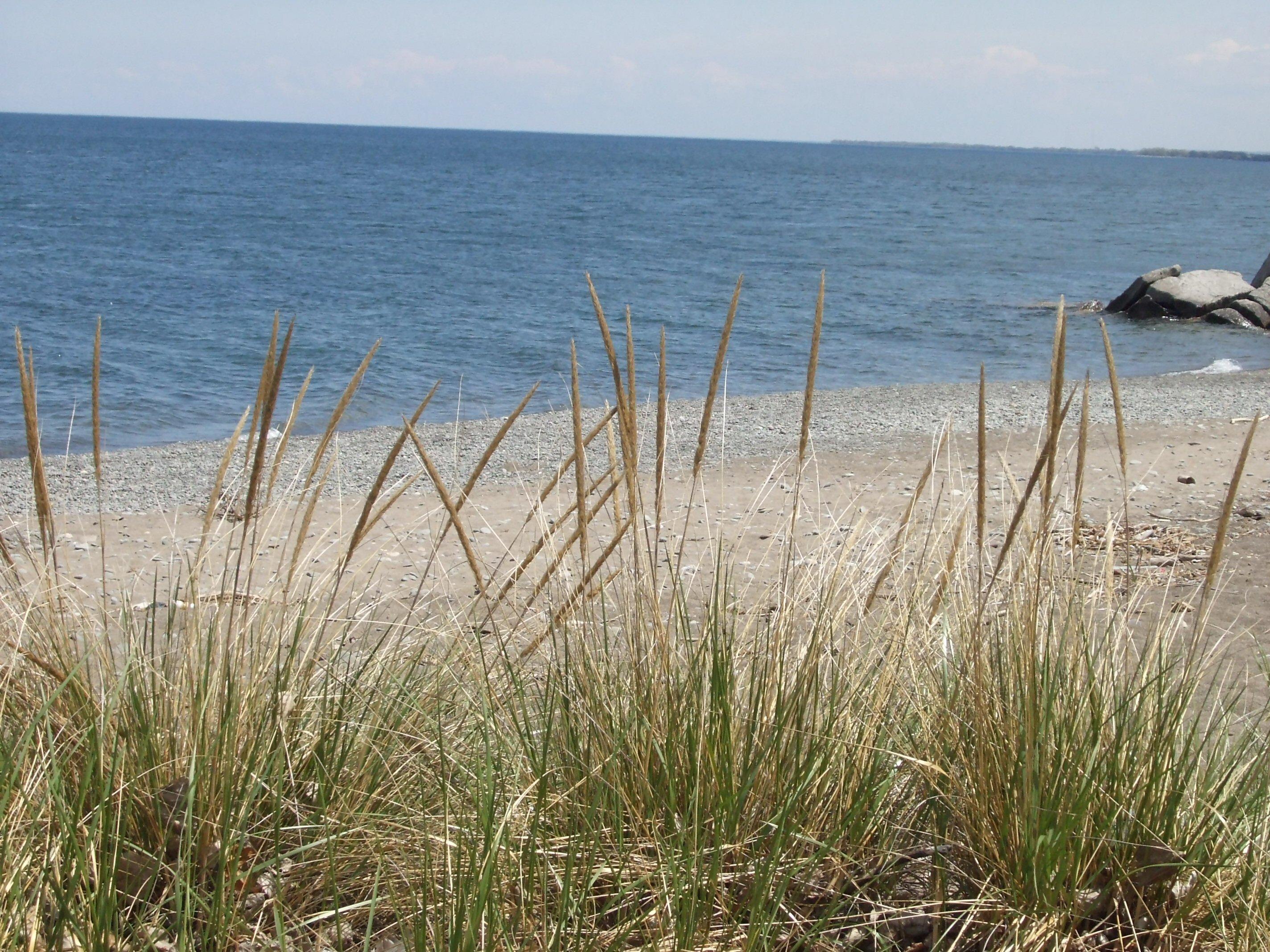 Grass at the beach, Beach, Blue, Fun, Grass, HQ Photo