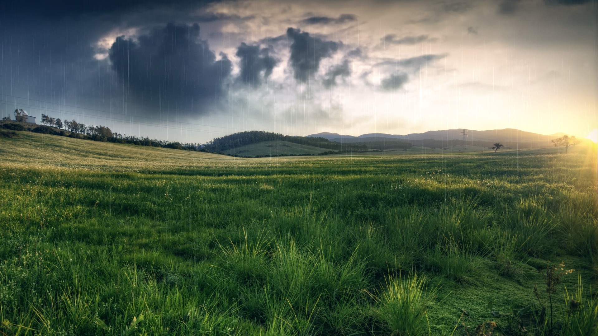 grass, Field, Rain, Nature Wallpapers HD / Desktop and Mobile ...