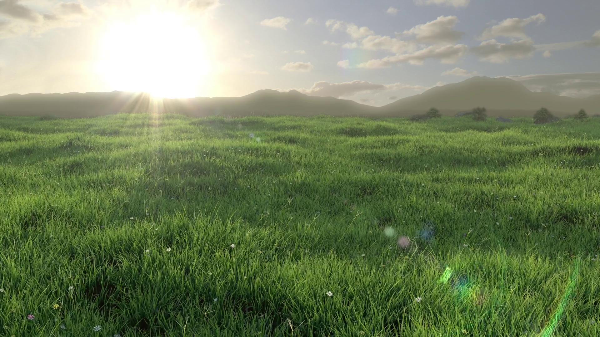 Grass Field - 3D Animation Motion Background - Videoblocks