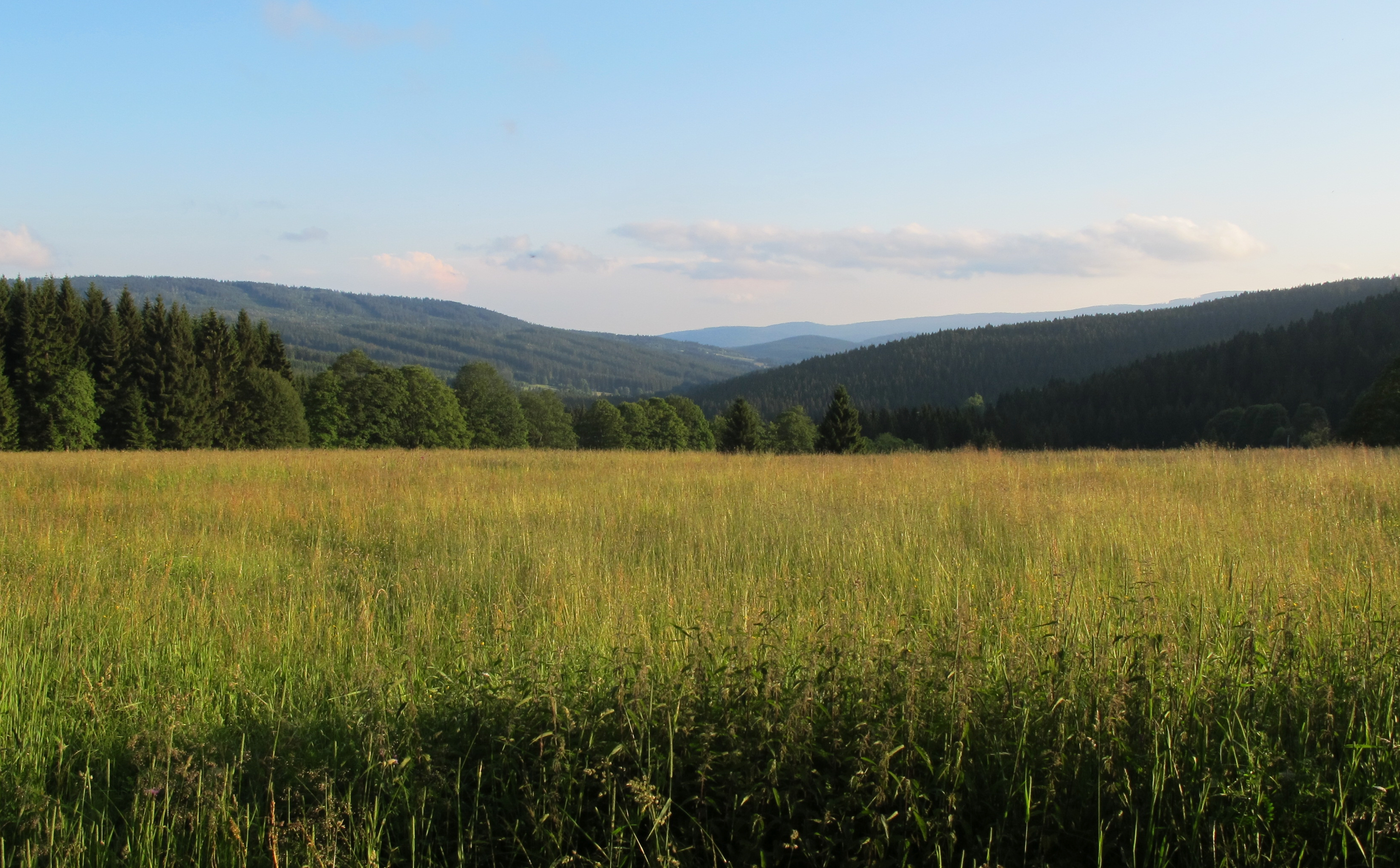 File:Grassfield in Šumava region (2).jpg - Wikimedia Commons