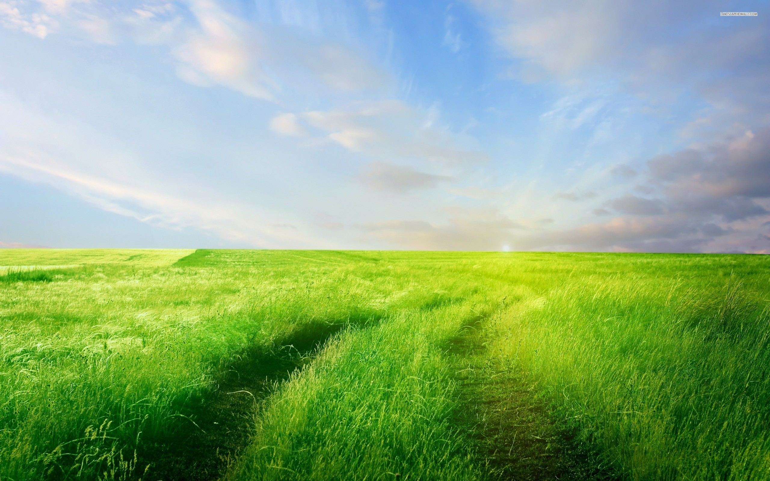 Grass Field HD Wallpaper, Background Images