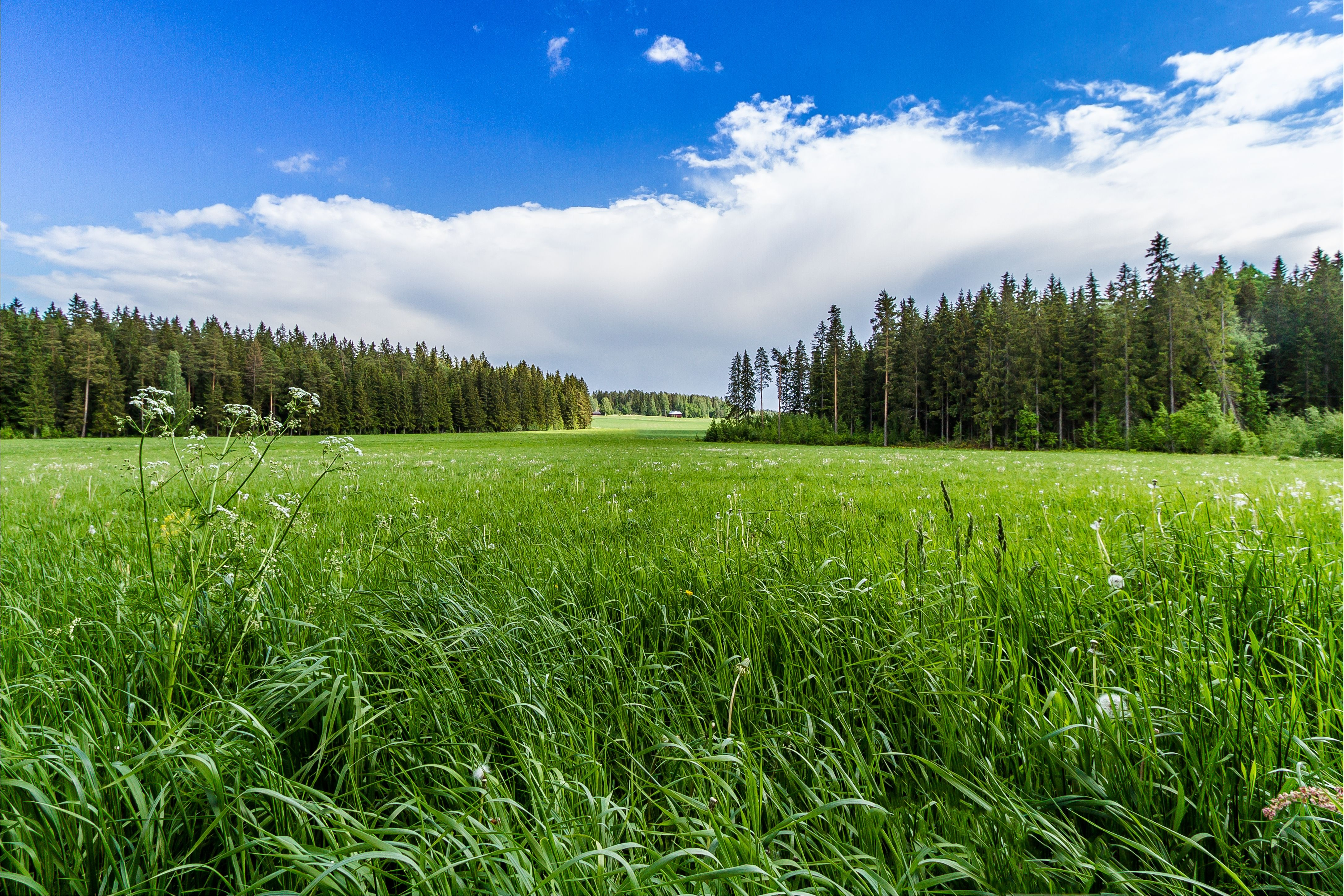 Field grass forest trees sky landscape r wallpaper | 4345x2897 ...