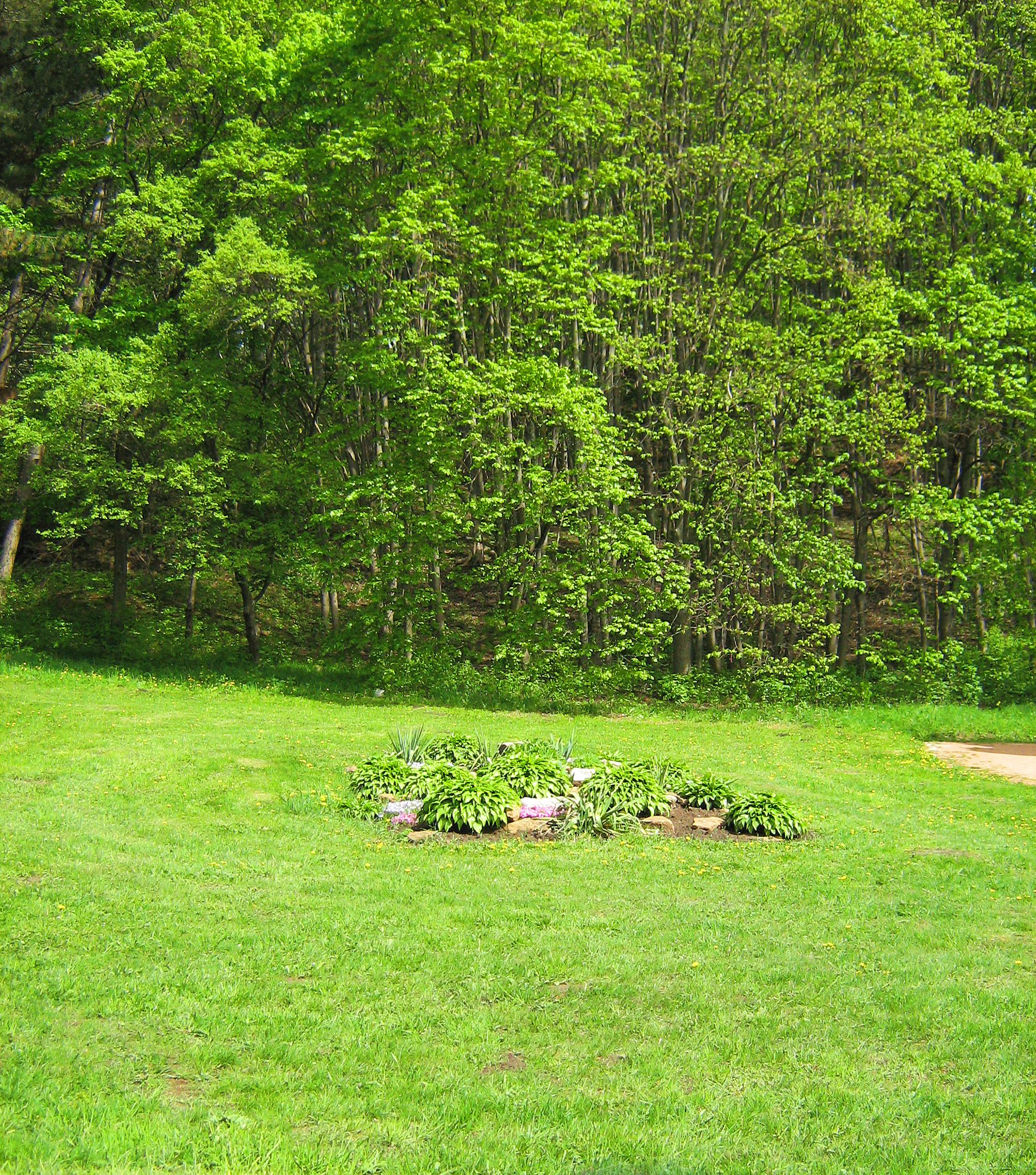 grass field, Sunshine, Leaf, Summer, Spring, HQ Photo