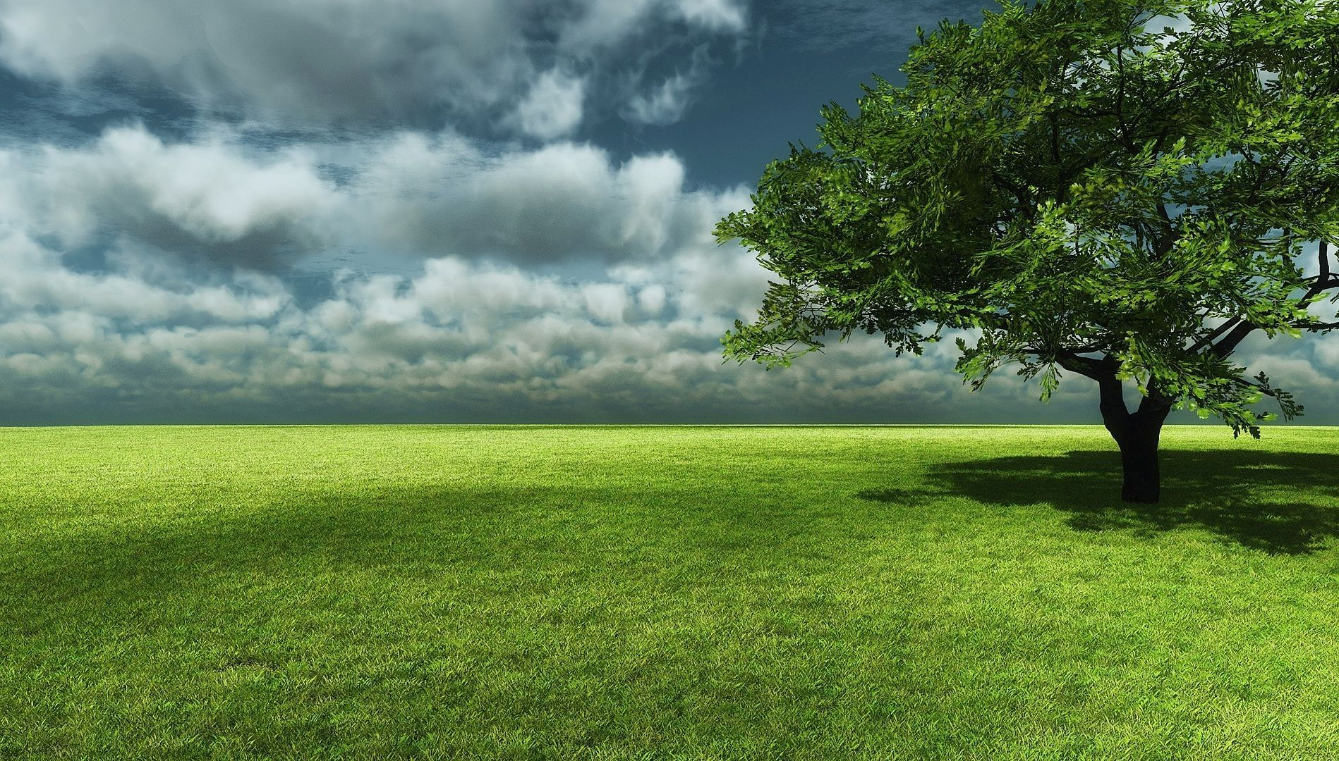 Big Tree with Grass Field Landscape wallpaper | WALLPAPER COLLECTION ...