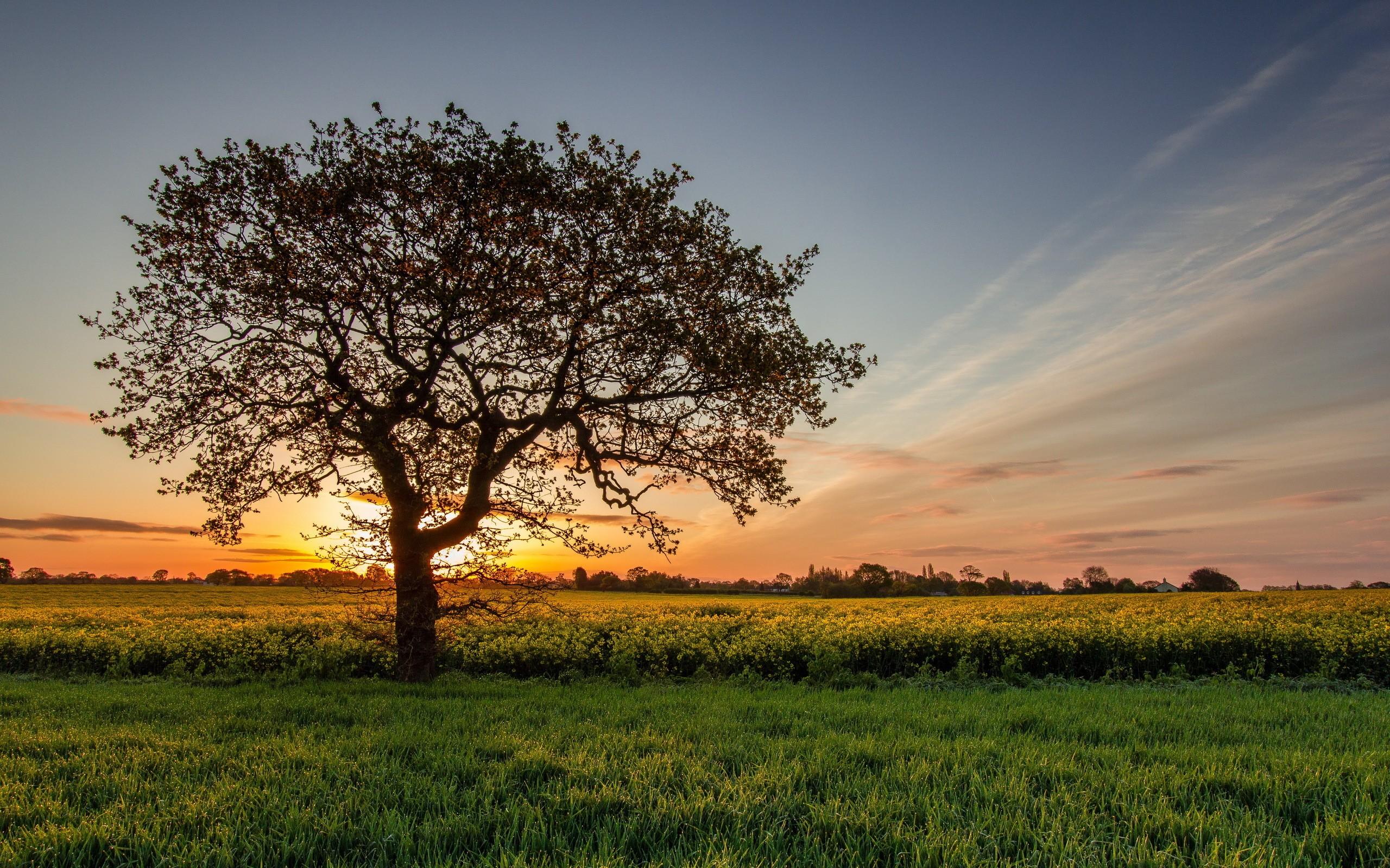 Field: Colors Sunset Sun Field View Sky Trees Splendor Nature Green ...