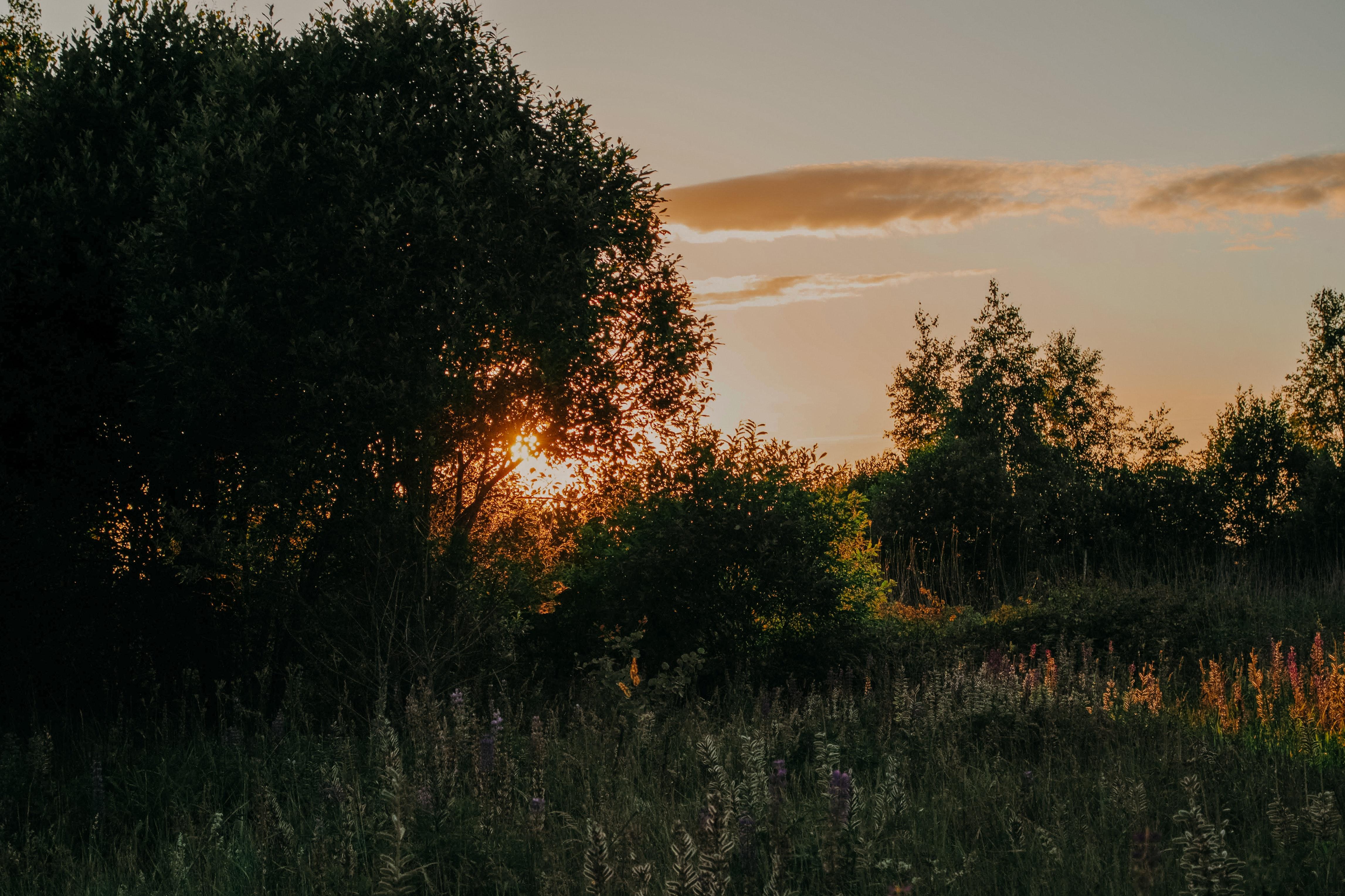 Grass Field and Trees during Sunset, Beautiful, Light, Sunset, Sun, HQ Photo