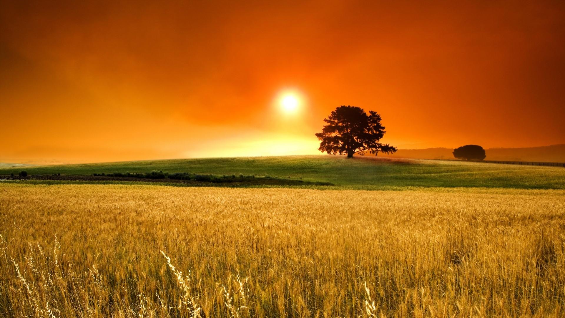 Fields: Wheat Living Nature Tree Golden Sky Sun Grass Country Orange ...