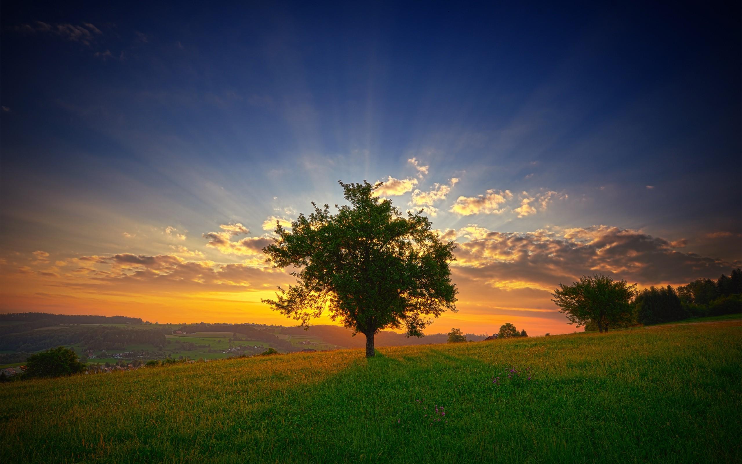 summer, Field, Sunset, Trees, Landscape, Clouds, Grass Wallpapers HD ...