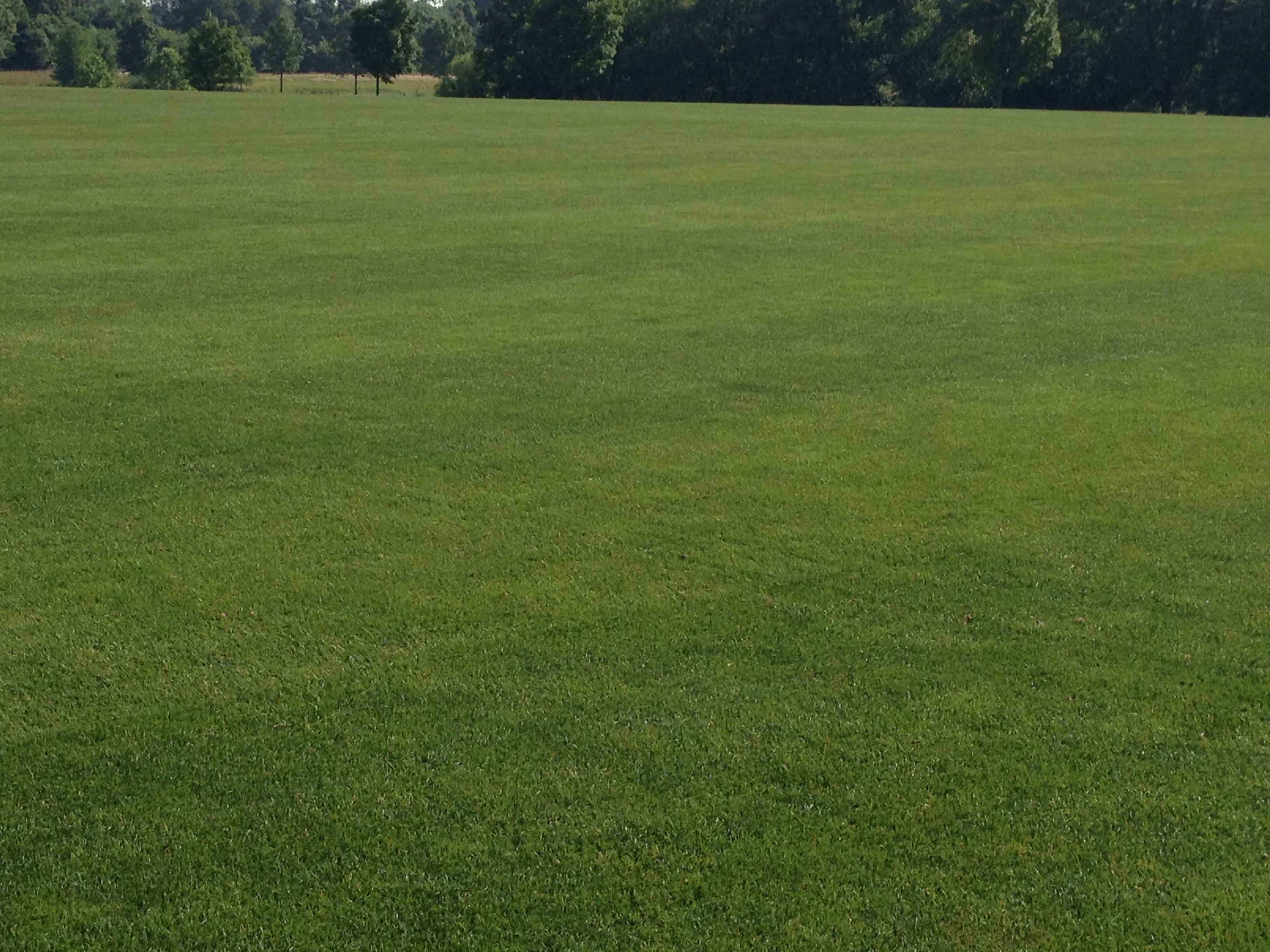 Synthetic v. Grass: The Numbers   Growing Green Grass