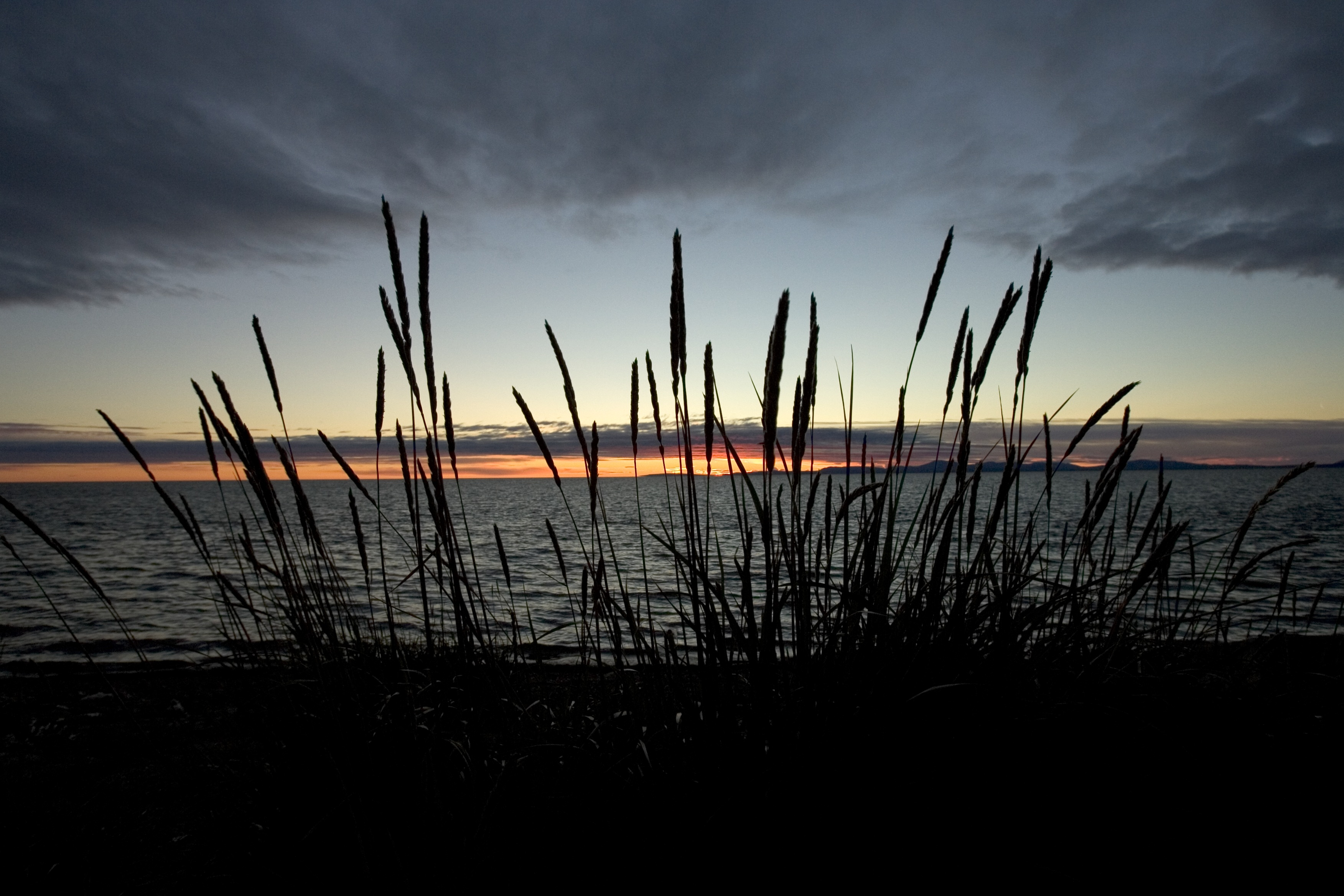 Grass on the shore photo