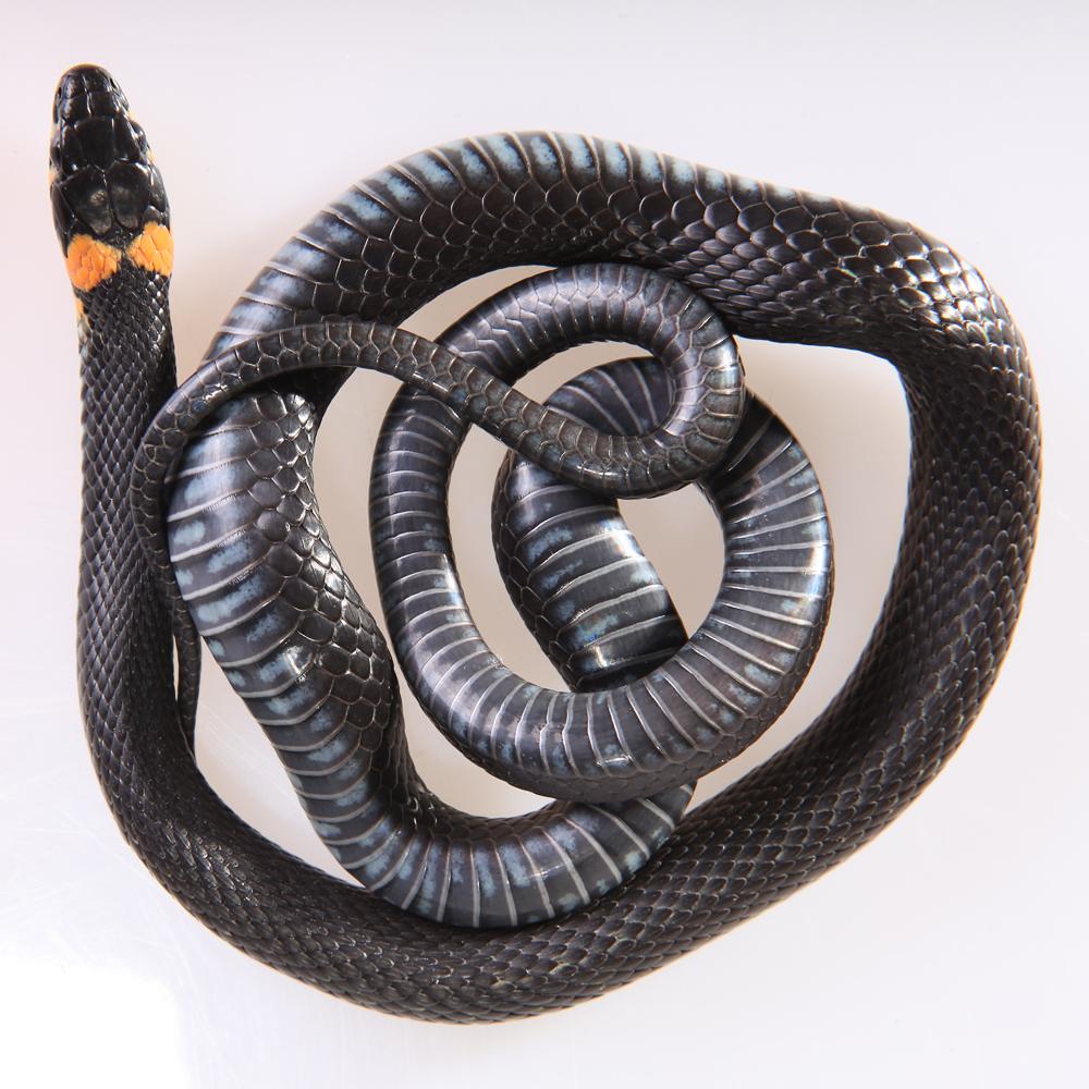 Grass-snake photo