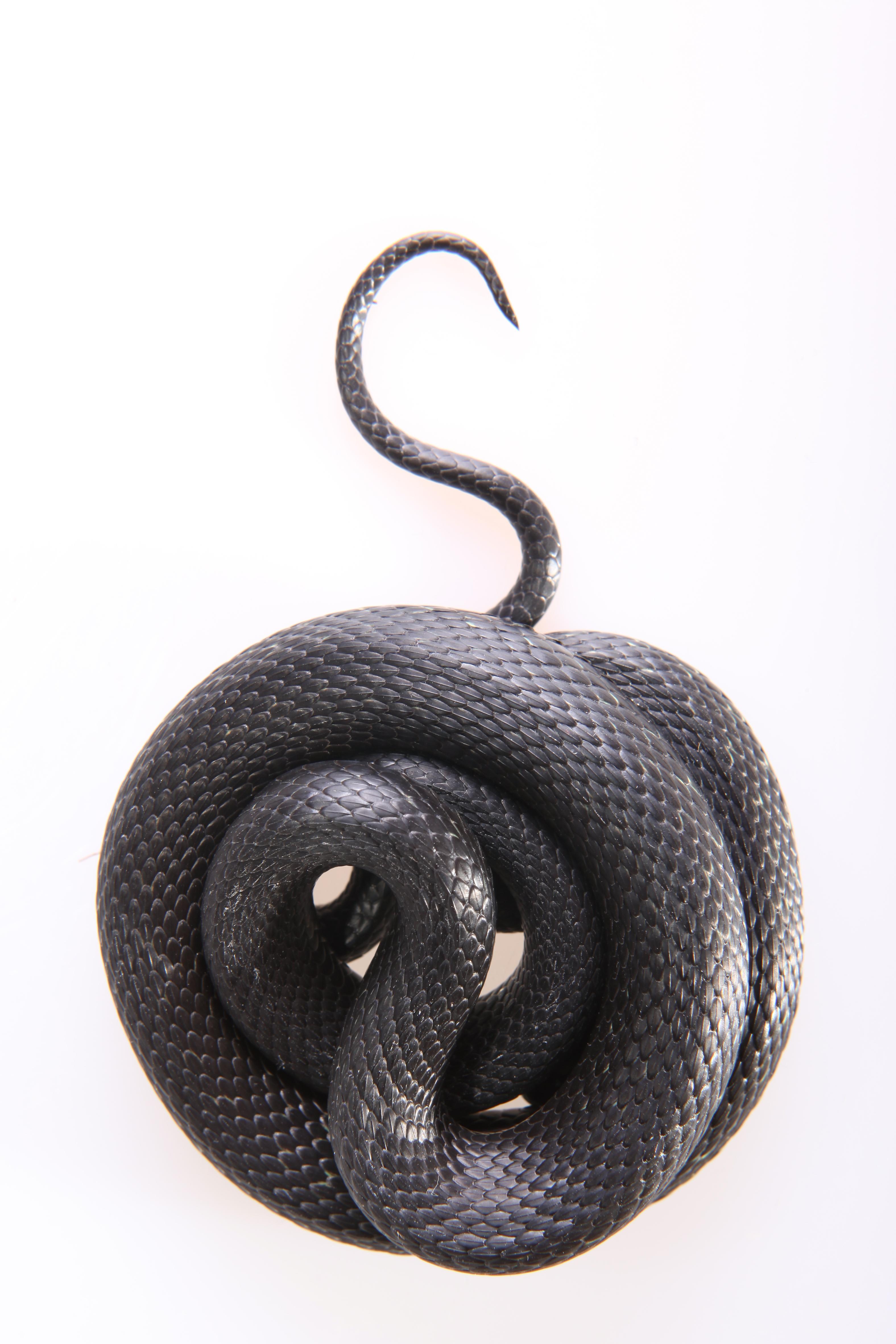 Grass-snake, Animal, Nature, Tongue, Threats, HQ Photo