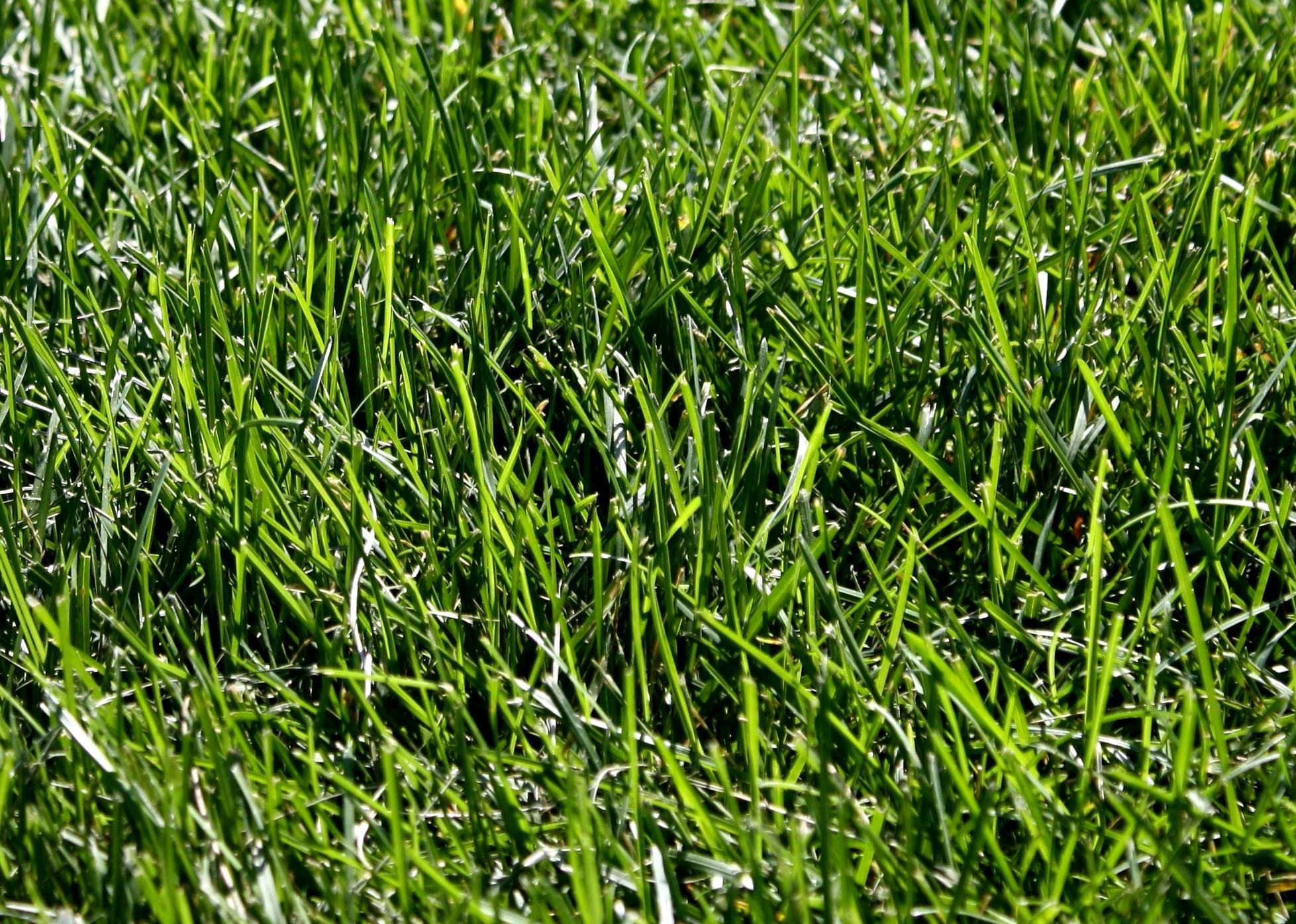 Grass texture free images, public domain images